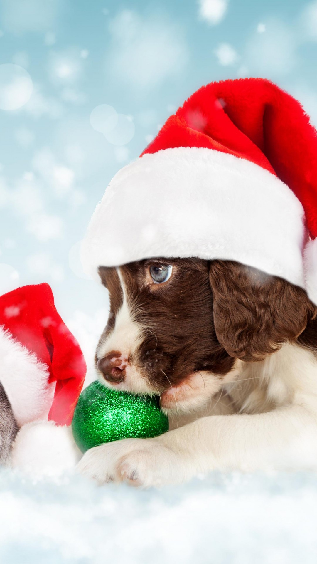 Wallpaper Christmas, New Year, snow, puppy, kitten, cute ...