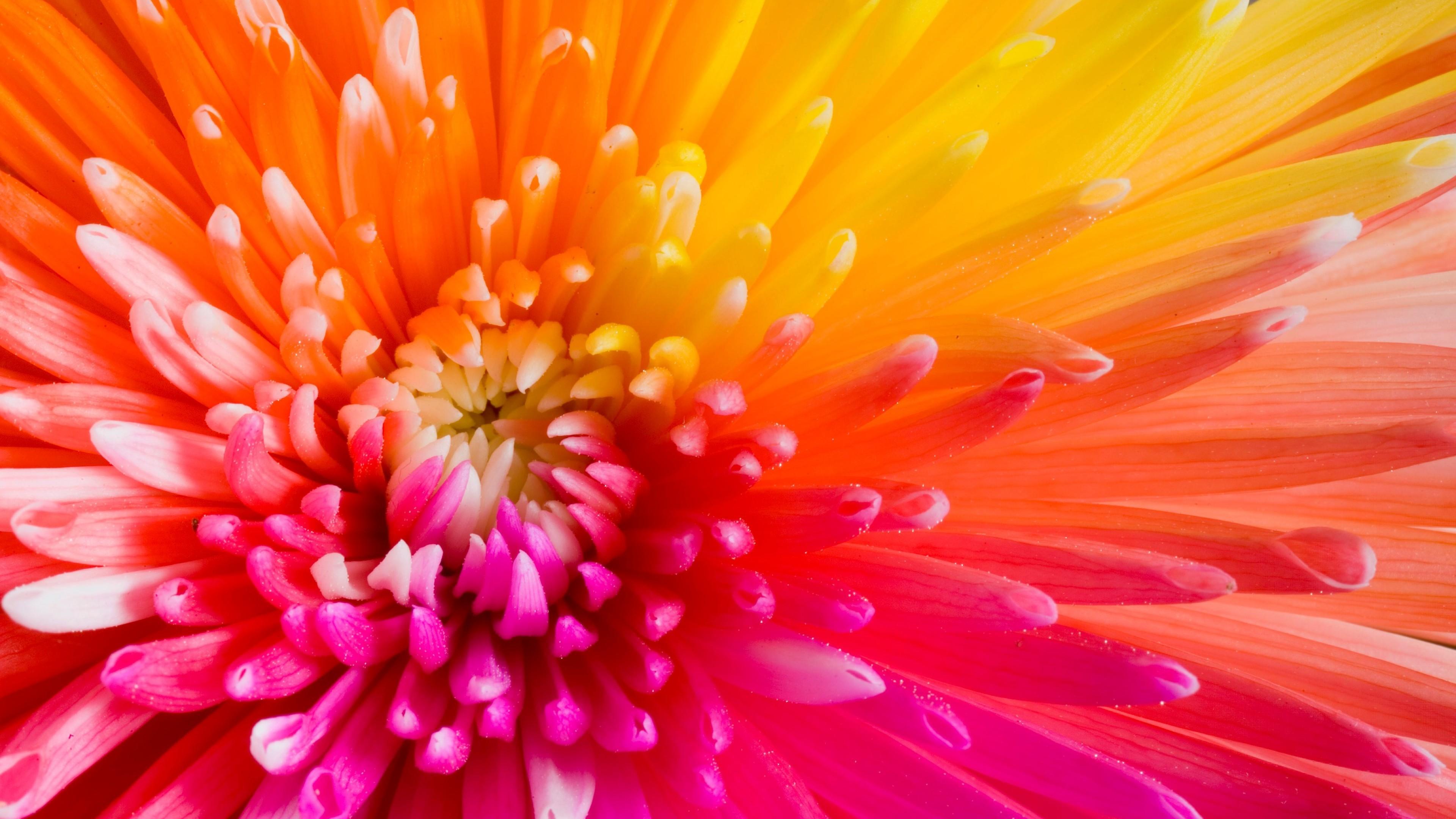Wallpaper colourful flowers, 4k, HD wallpaper, flowers