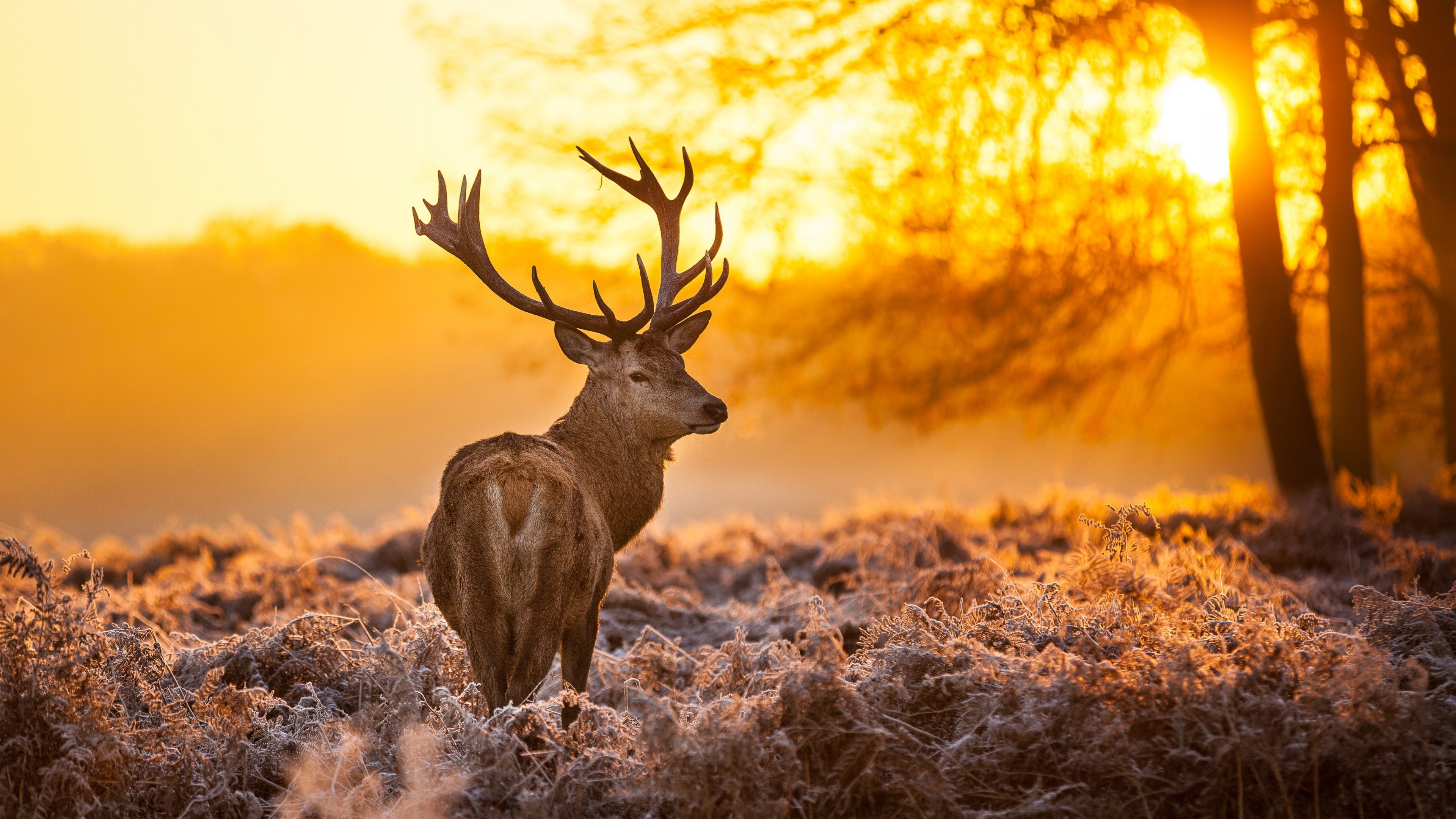 Wallpaper deer 4k hd wallpaper wild sun yellow - Hd wilderness wallpapers ...