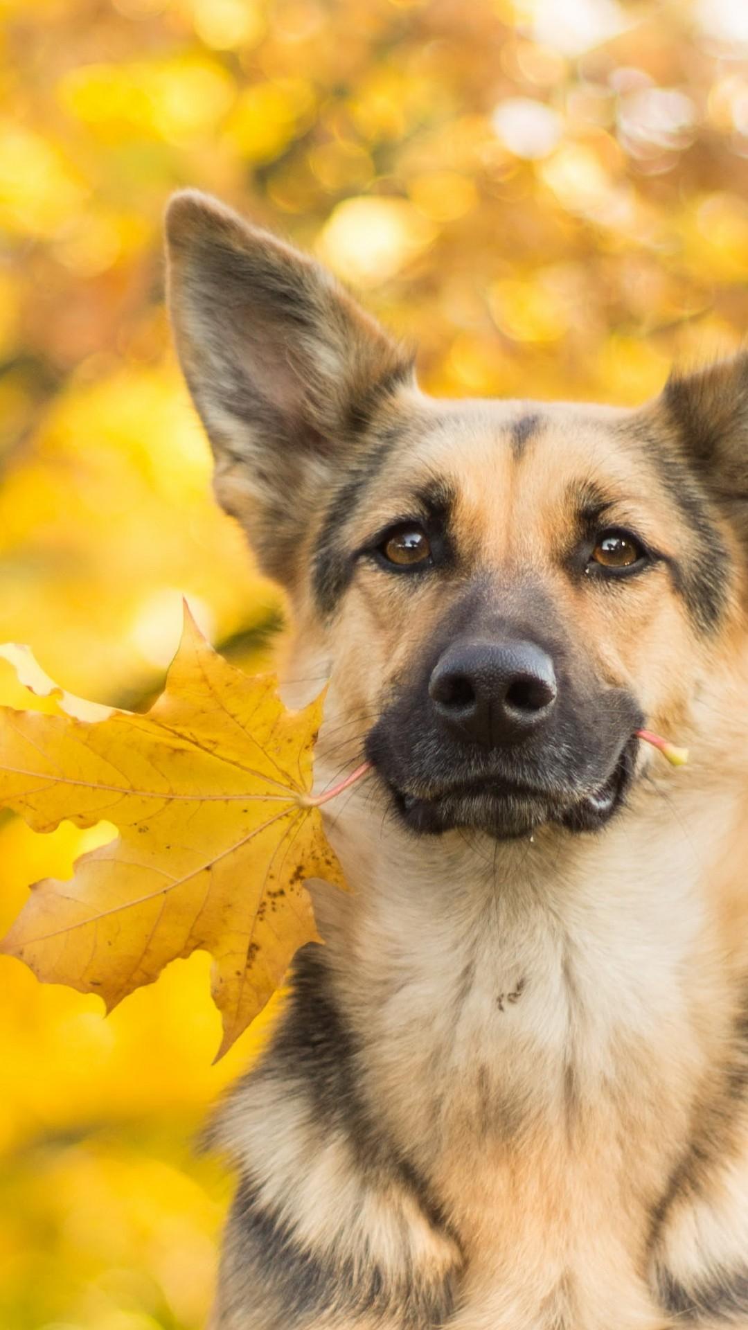Wallpaper Dog Cute Animals Leaves Autumn 4k Animals