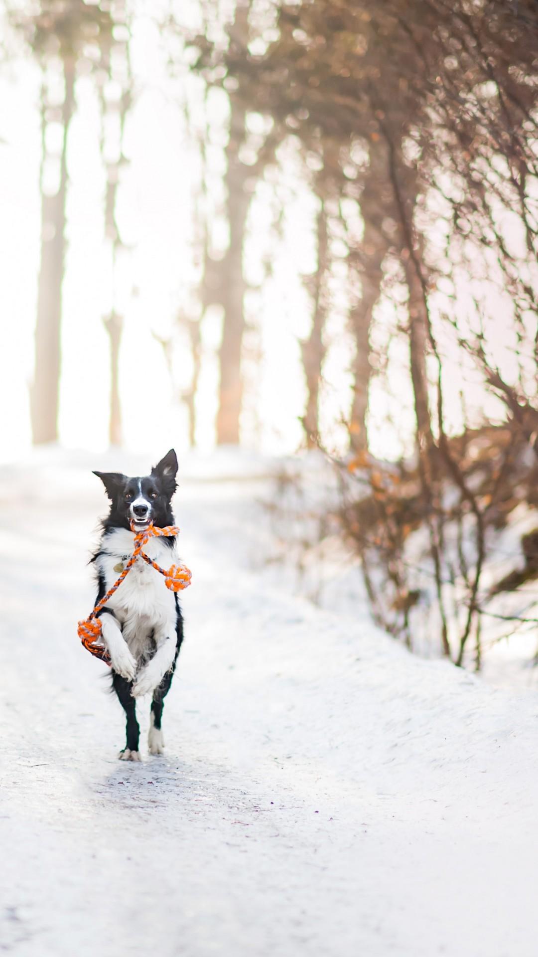 Wallpaper dog, cute animals, winter, snow, trees, 4k