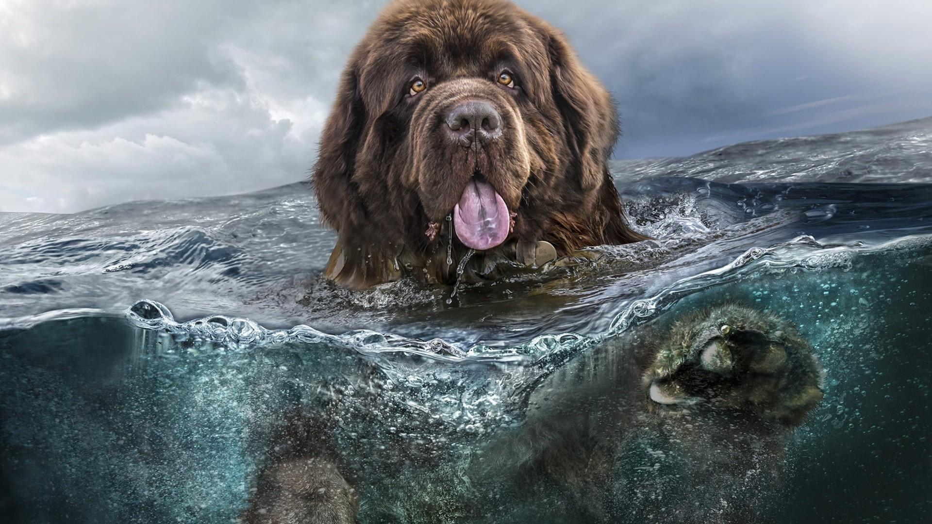 Wallpaper Dog Water 4k Animals 14942
