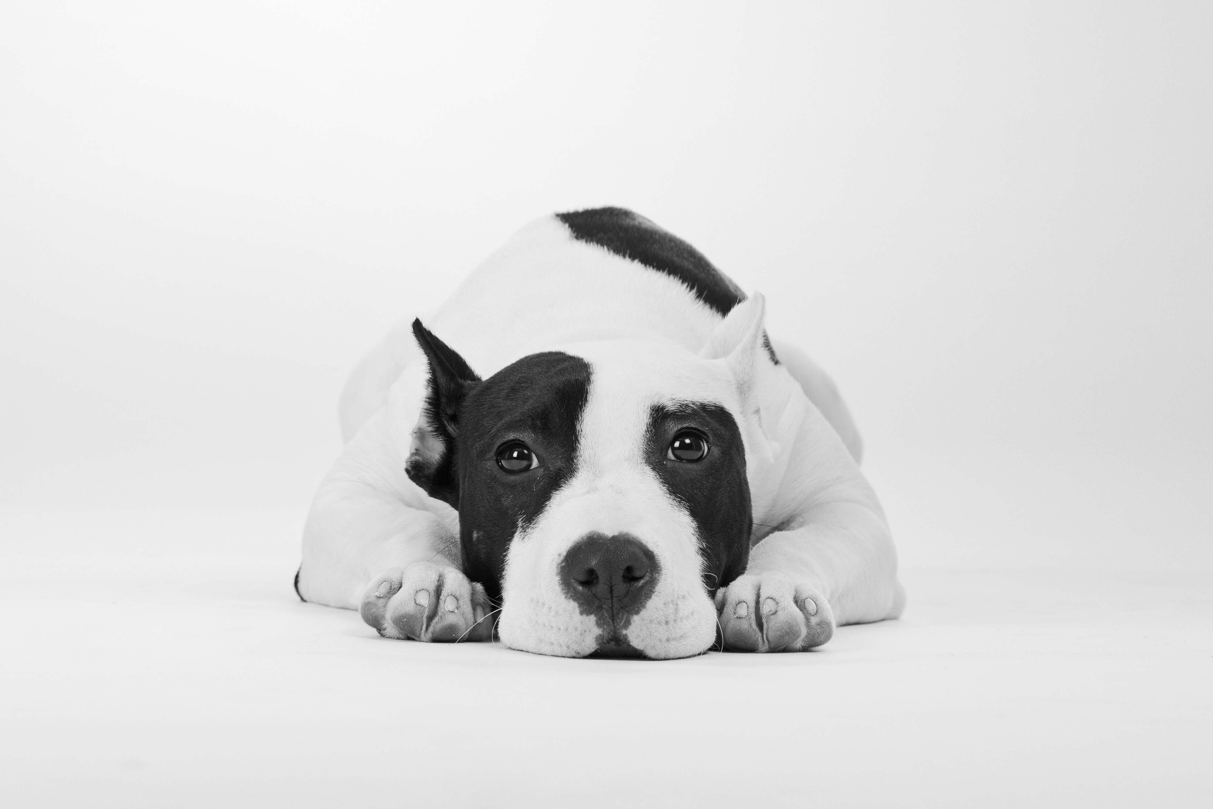 Wallpaper Dog Cute Animals 4k Animals 16591
