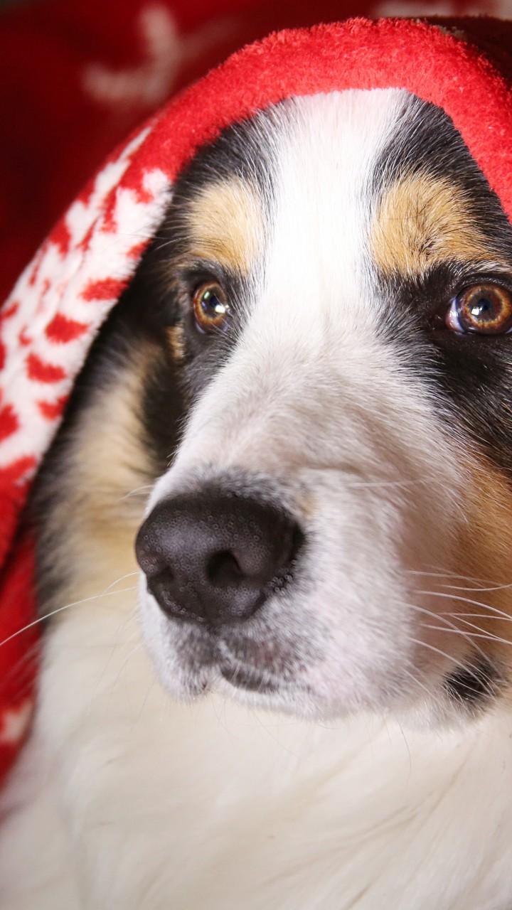 Wallpaper dog, cute animals, 5k, Animals #17029