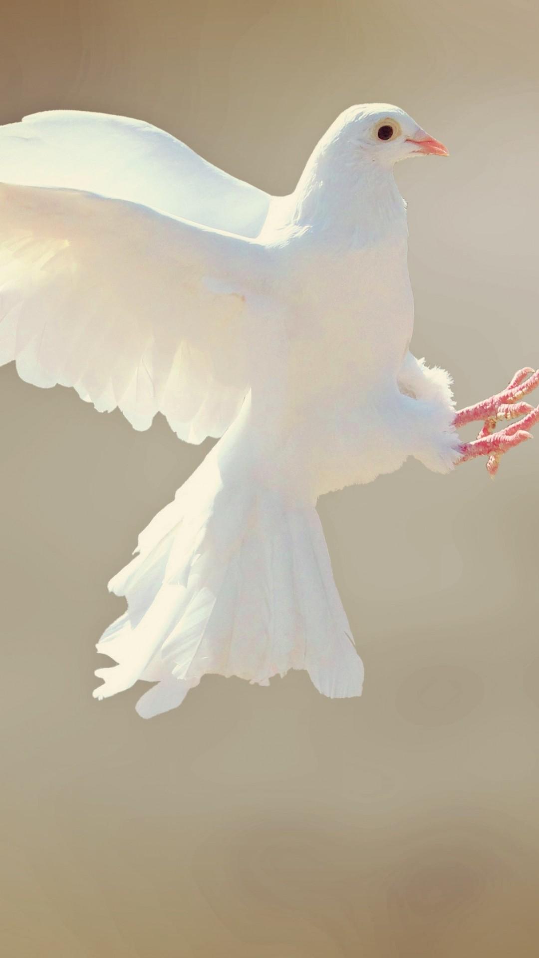 Wallpaper Dove Bird 4k Animals 15268