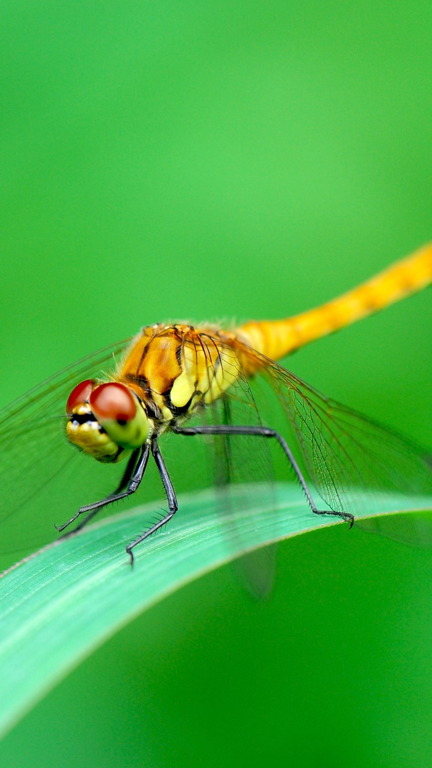 wallpaper dragonfly  green  4k  animals  14983