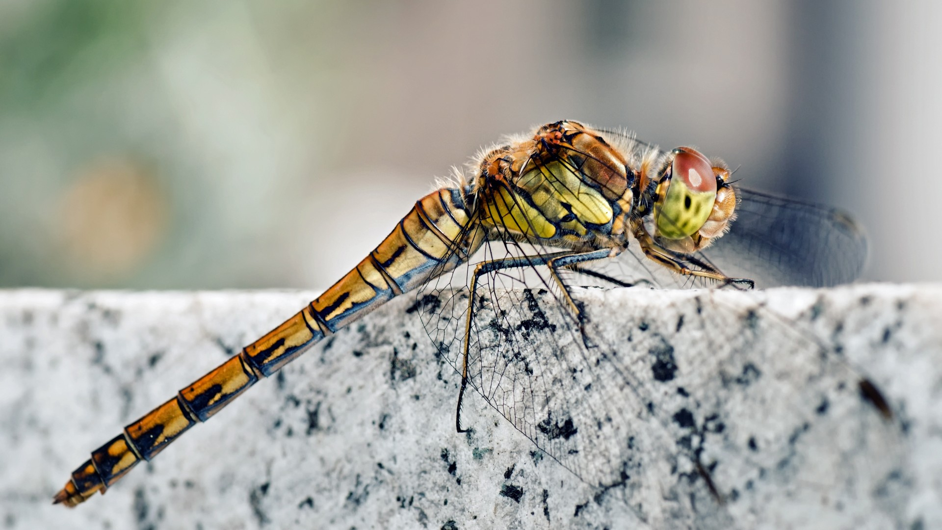 Eyes Of A Dragonfly Nature Dew Cute Macro Hd Wallpaper: Wallpaper Dragonfly, Macro Insects Photography, Wings