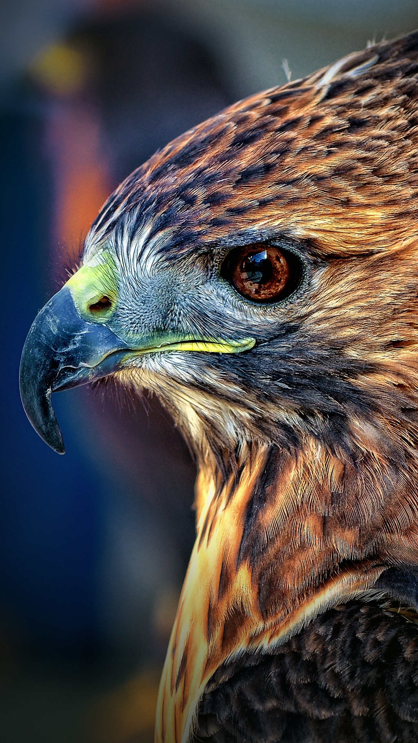 Wallpaper Eagle, Blur, Cute Animals, Animals #4485
