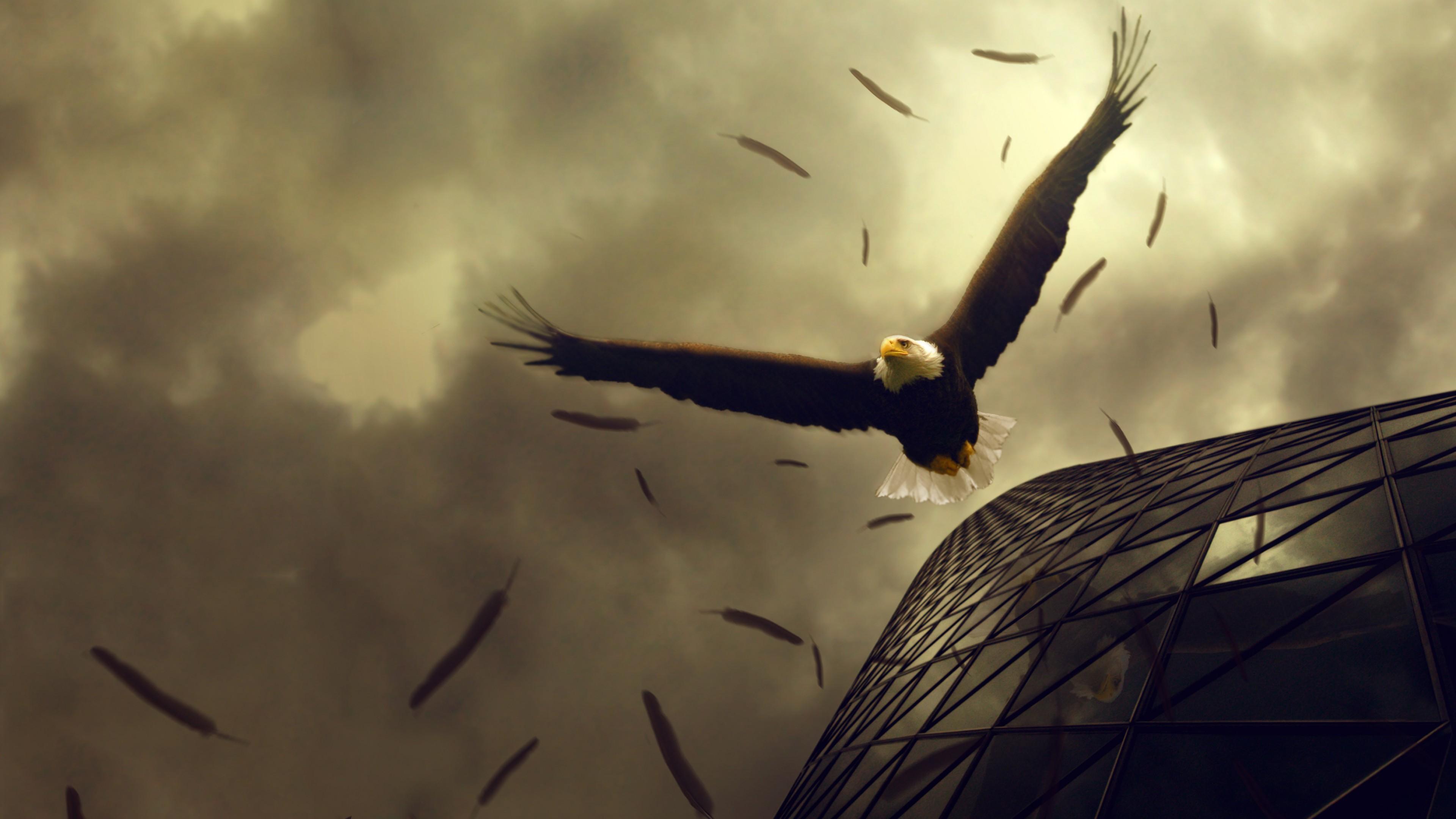 Wallpaper Eagle, 4k, HD wallpaper, sky, clouds, building ...