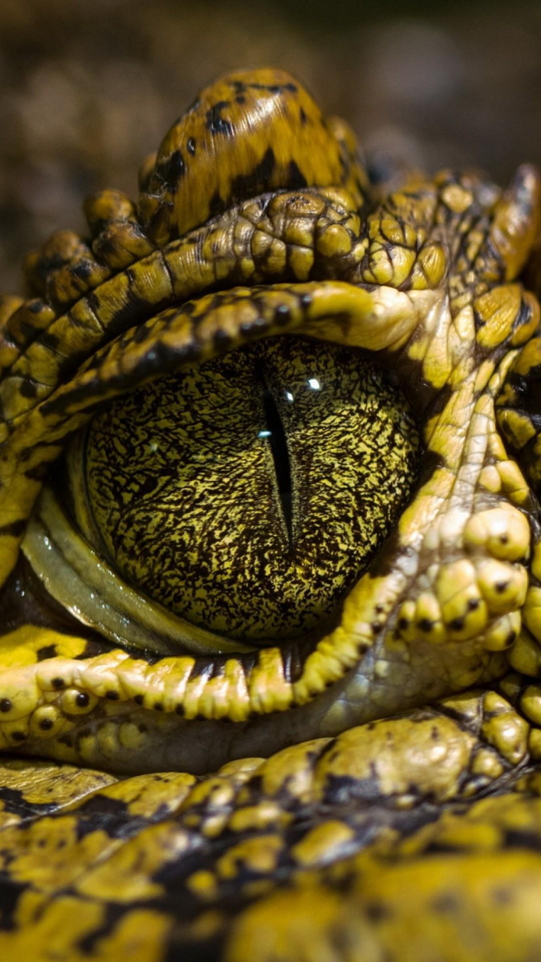 Wallpaper eye crocodile, wild eyes, reptilies, Animals #10124