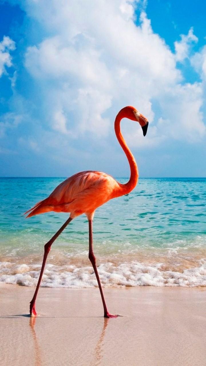 Flamingo X Bird Beach Ocean K