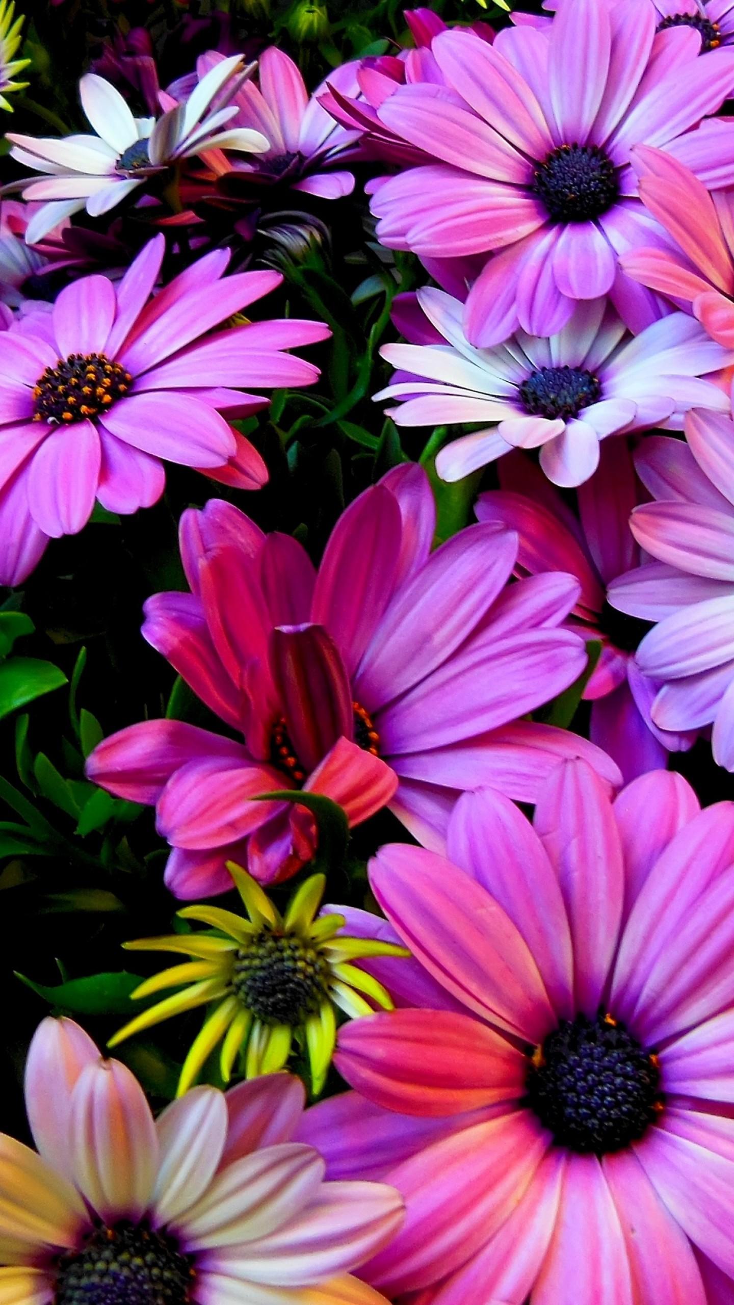 Wallpaper Flowers, 4k, HD Wallpaper, Hibiscus, Colours