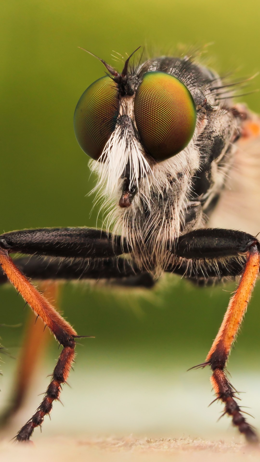 Wallpaper Fly Insects Macro Green Orange Animals 1258