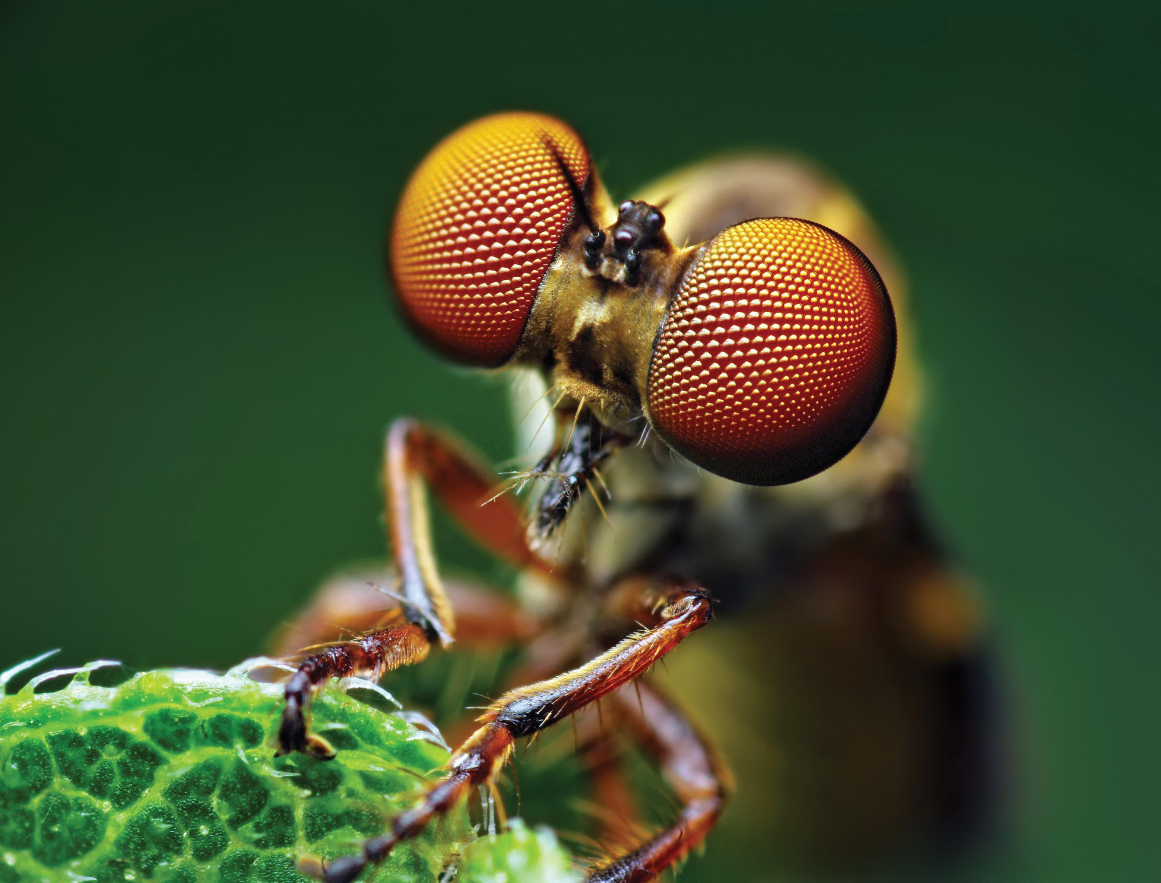 Fly Wallpaper  Animals...