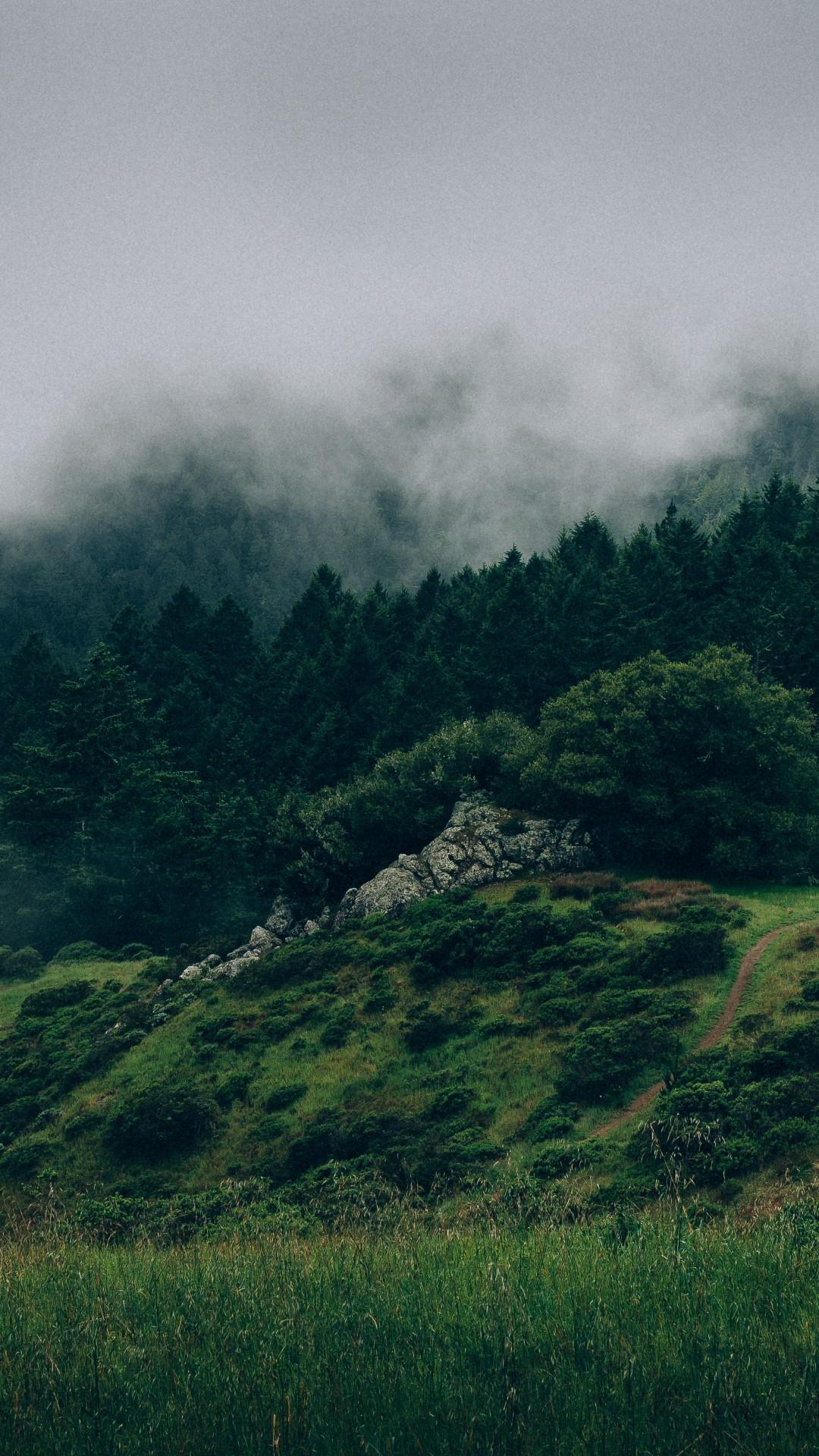 Wallpaper Forest 5k 4k wallpaper 8k mist hills fog