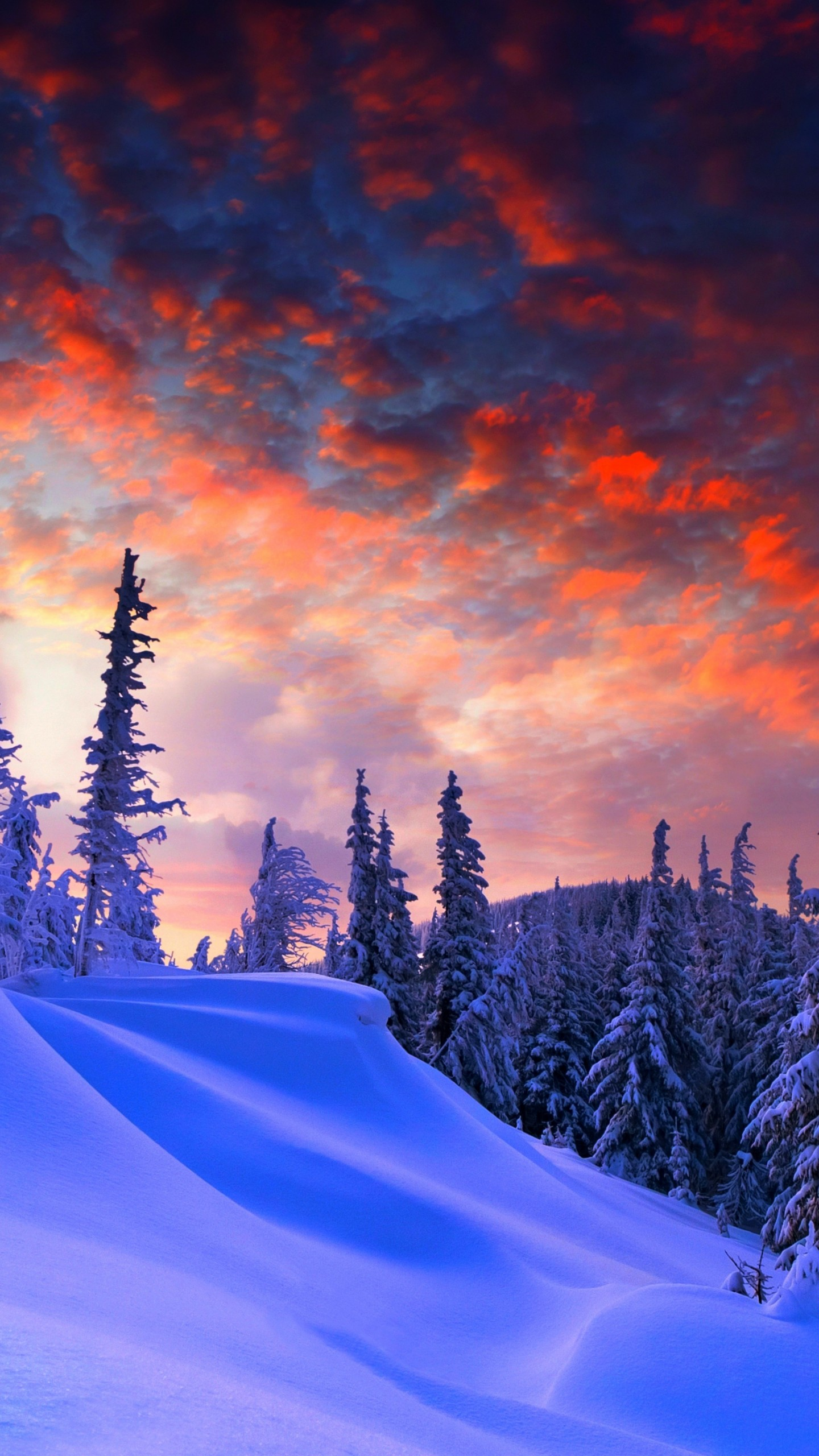 Wallpaper Forest, Snow, Winter, Sunrise, Clouds, 8k