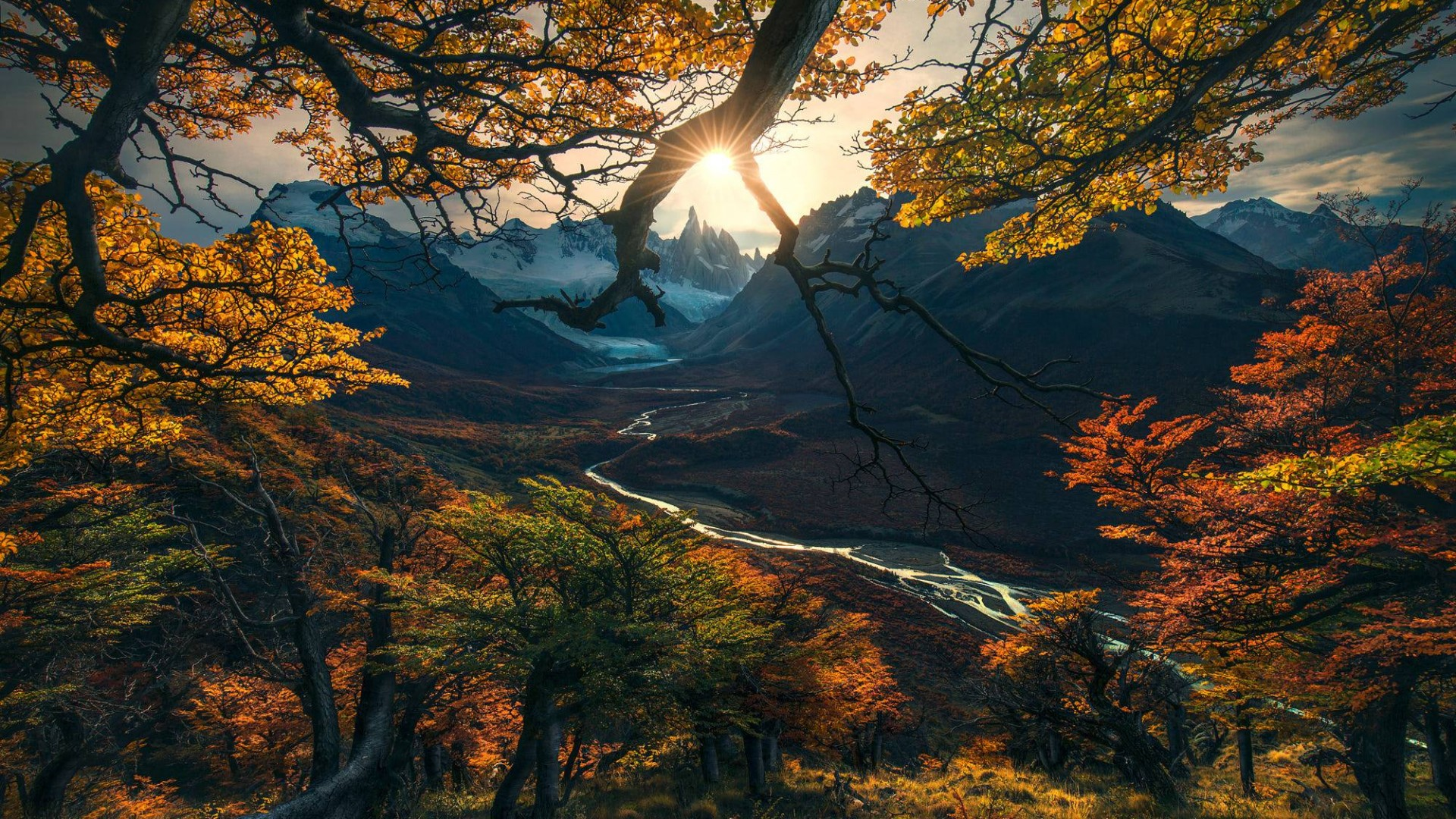 Wallpaper Forest, Tree, Mountains, Autumn, HD, Nature #15808