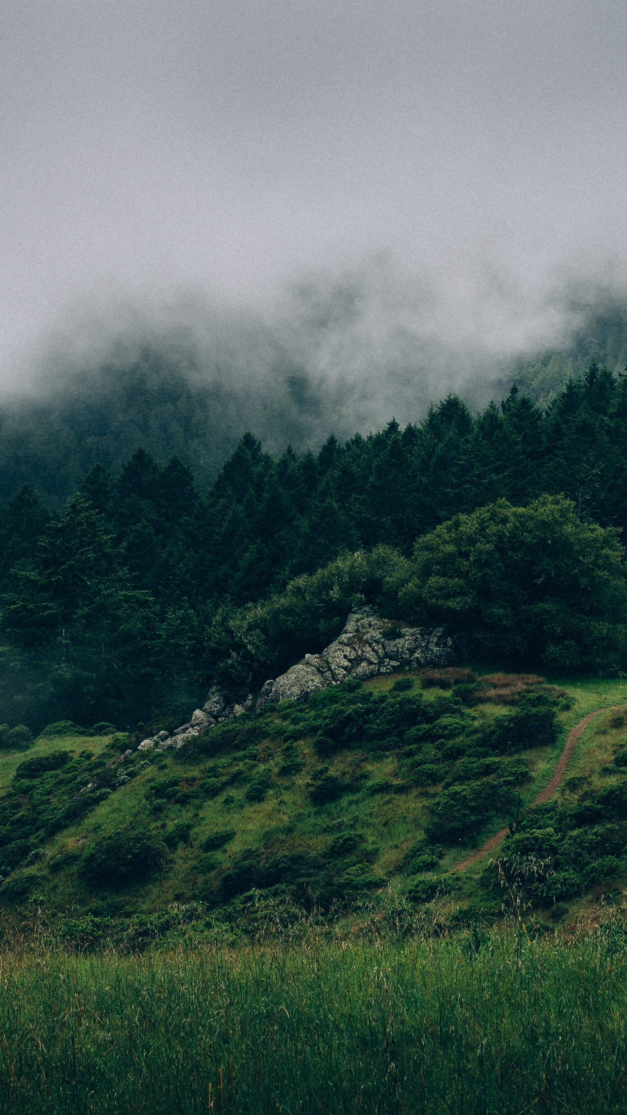 Wallpaper Nature 8k: Wallpaper Forest, 5k, 4k Wallpaper, 8k, Mist, Hills, Fog