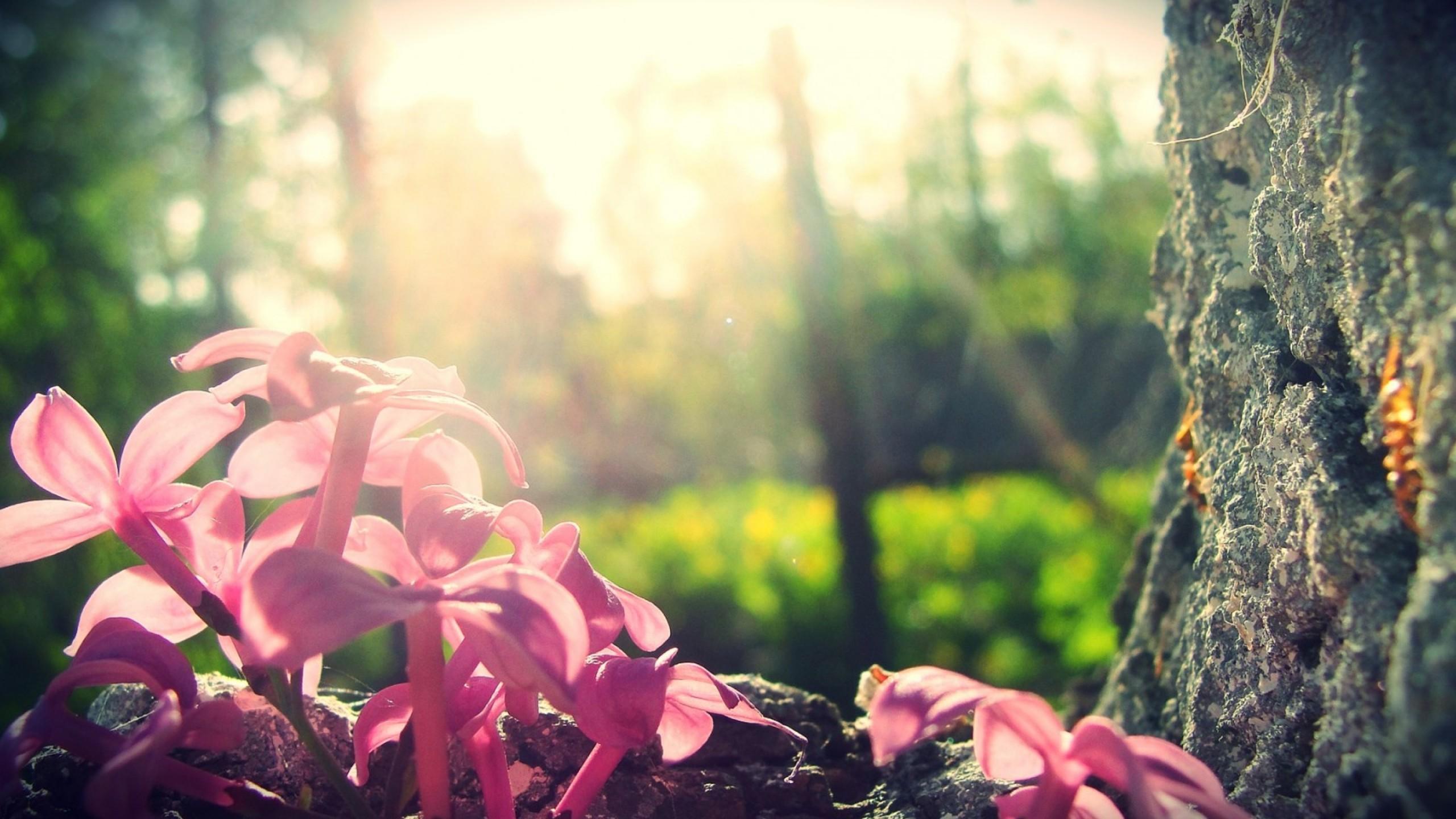 Wallpaper Forest 4k Hd Wallpaper Lilac Tree Flowers