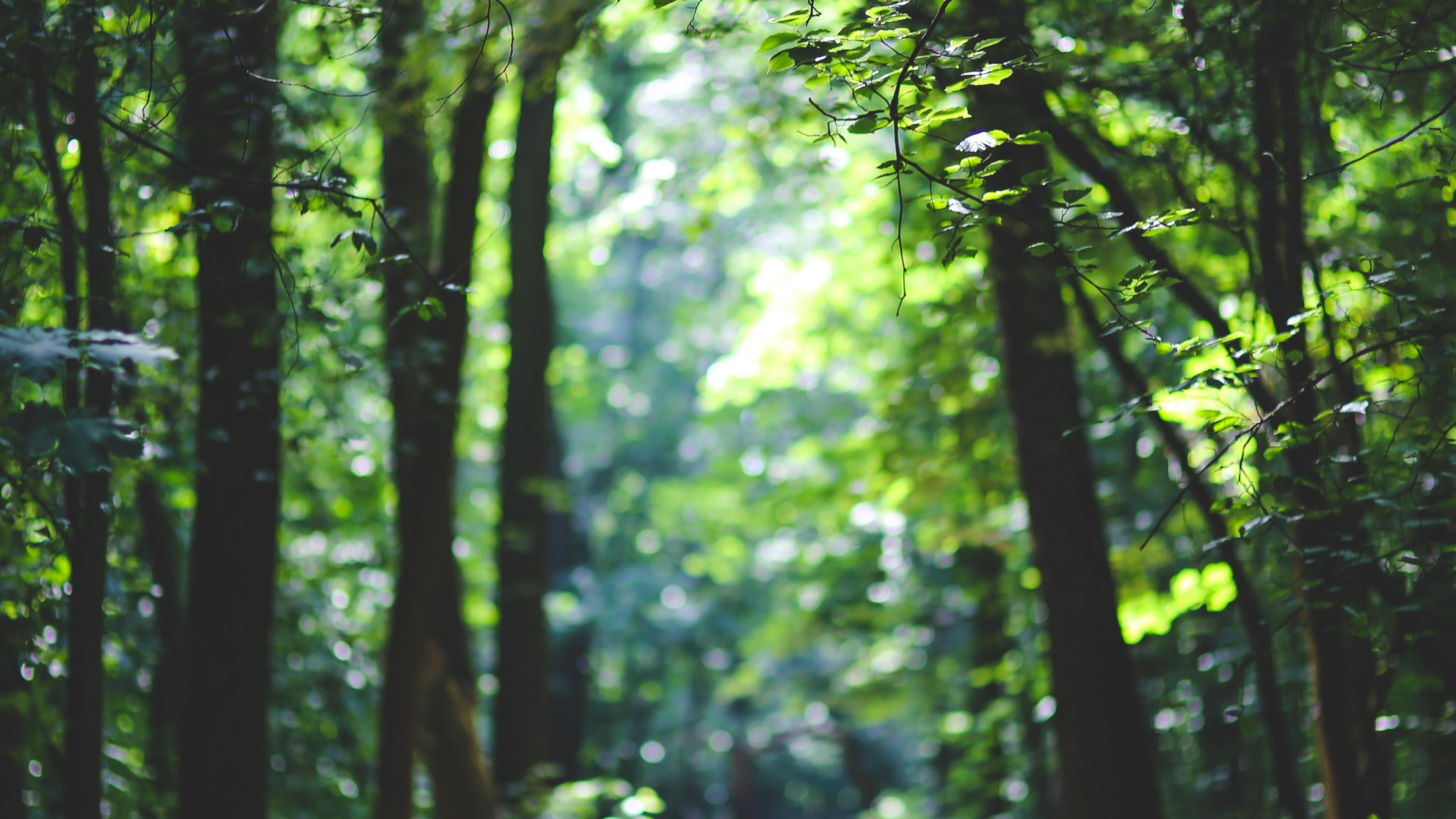 Wallpaper Forest 5k 4k Wallpaper 8k Trees Sunlight