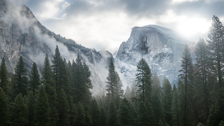 Popular Wallpaper Mountain Fog - forest-5932x3337-mountain-fog-5k-14977  2018_45895.jpg
