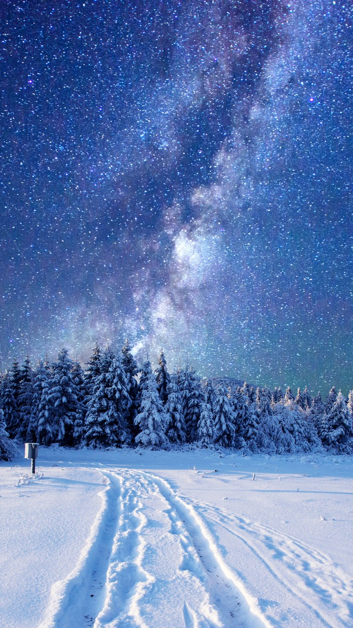 Wallpaper Forest  Snow  Winter  Sky  Stars  Night  5k