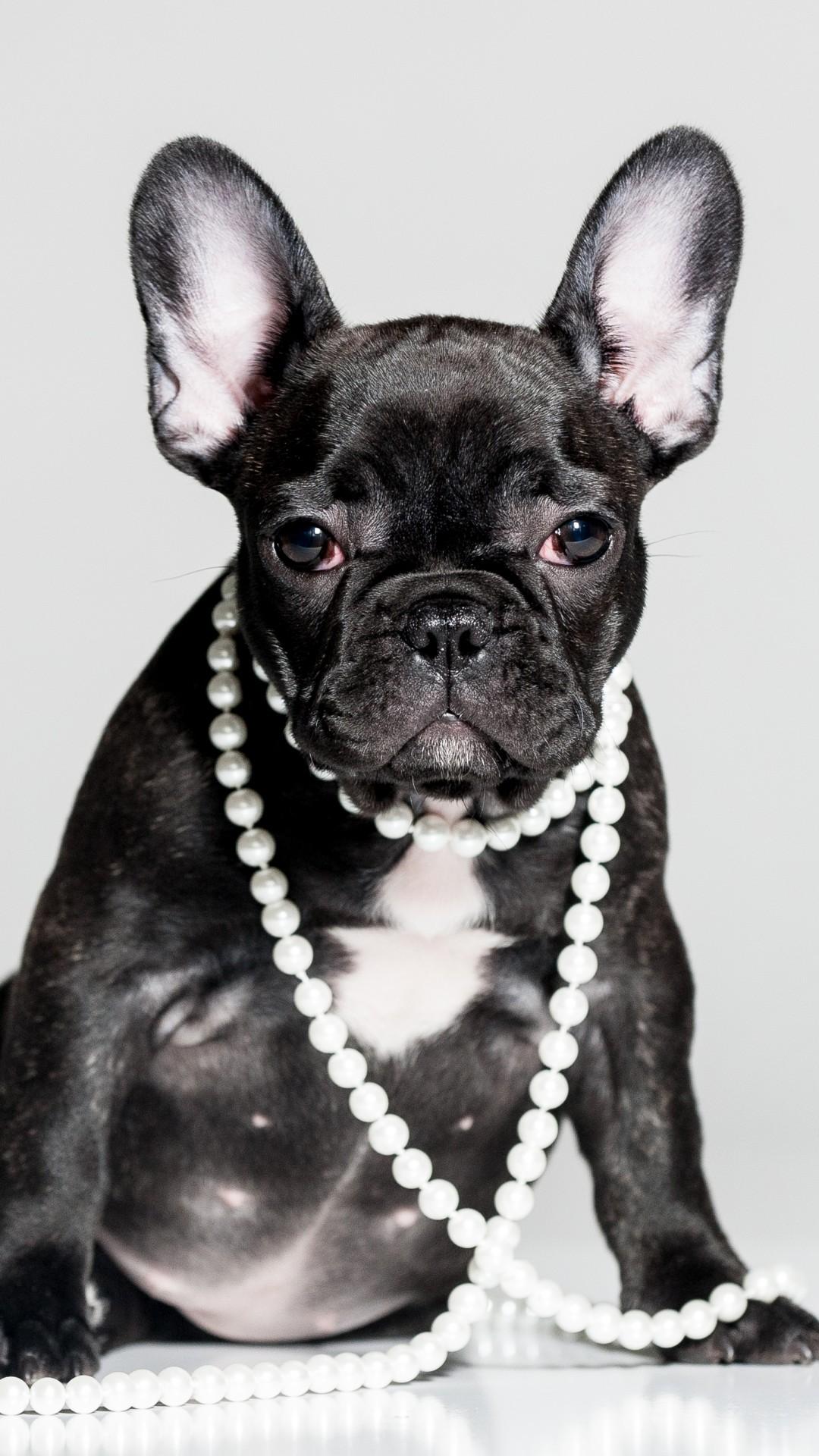Blue Puppy Food >> Wallpaper French Bulldog, puppy, cute animals, 5k, Animals #16219