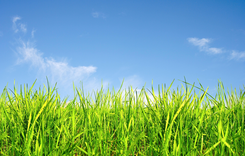 Wallpaper grass, sky, 5k, Nature #16098