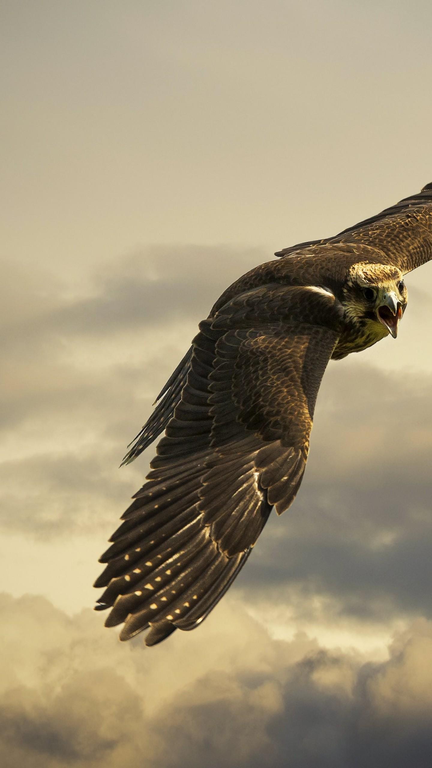 Wallpaper Hawk, 4k, HD wallpaper, sky, clouds, fly, gray ...