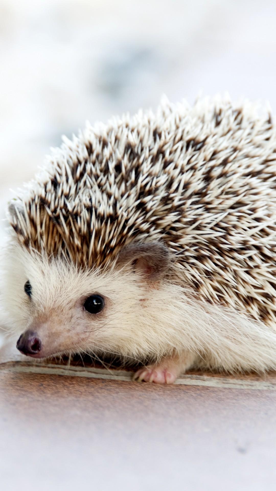 Small Wild Animals: Wallpaper Hedgehog, Cute Animals, 4k, Animals #15440
