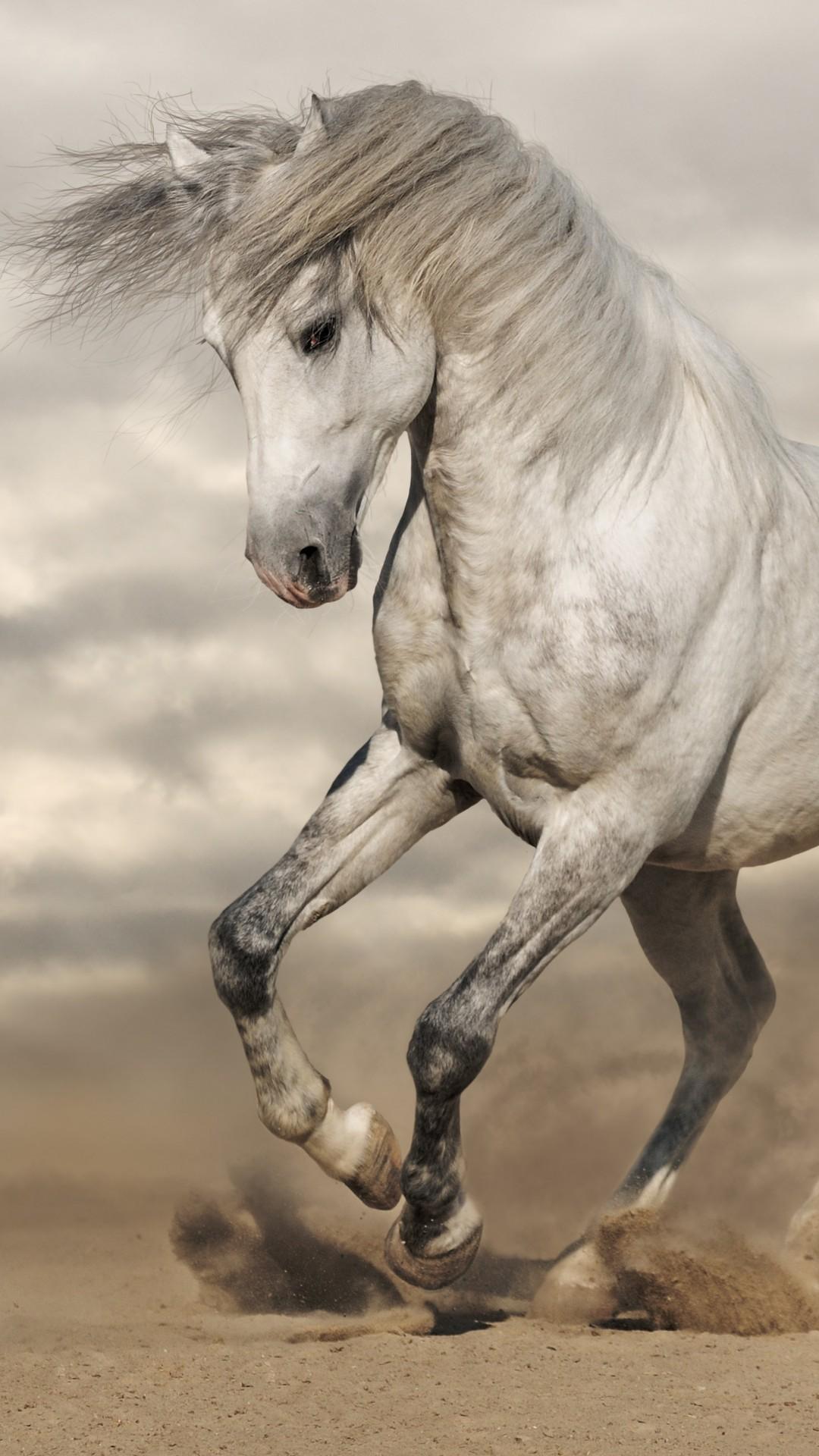 horse 8k animals wallpapers