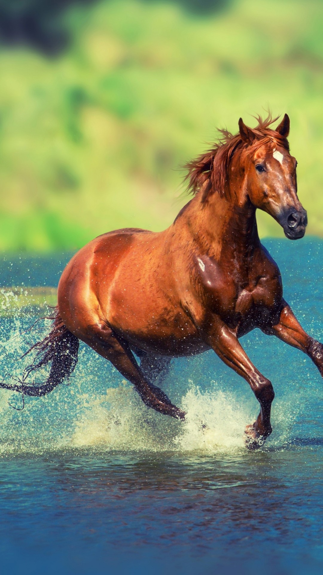 Wallpaper Horse Brown 4k Animals 19776