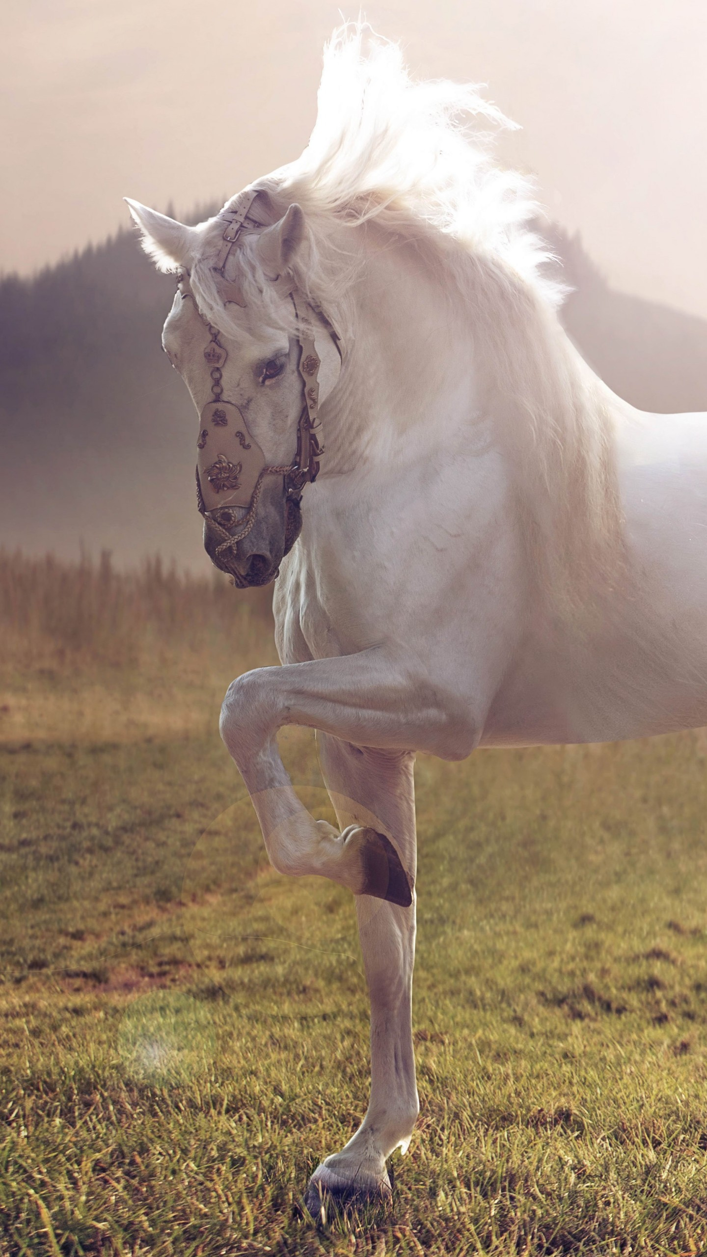 Wallpaper Horse, cute animals, sunset, Animals #4538