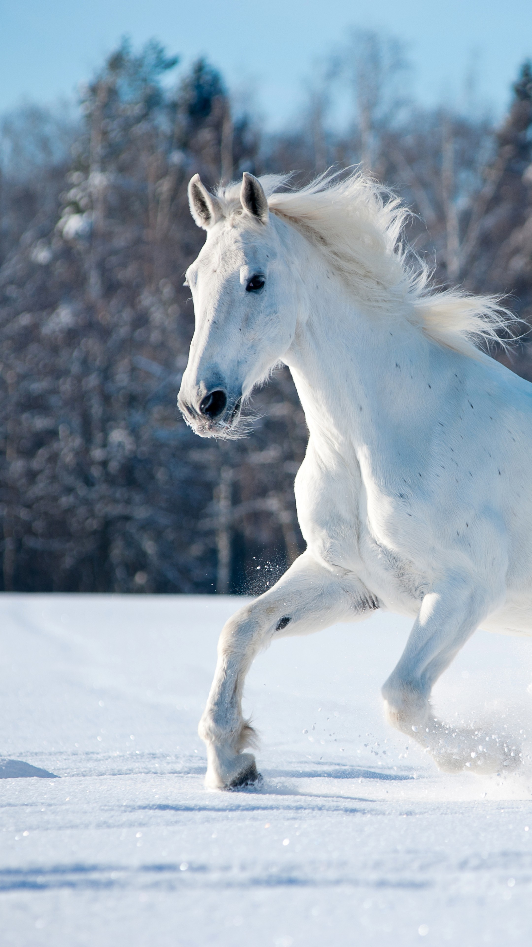 Wallpaper Horse Cute Animals Snow Winter 5k Animals 17108