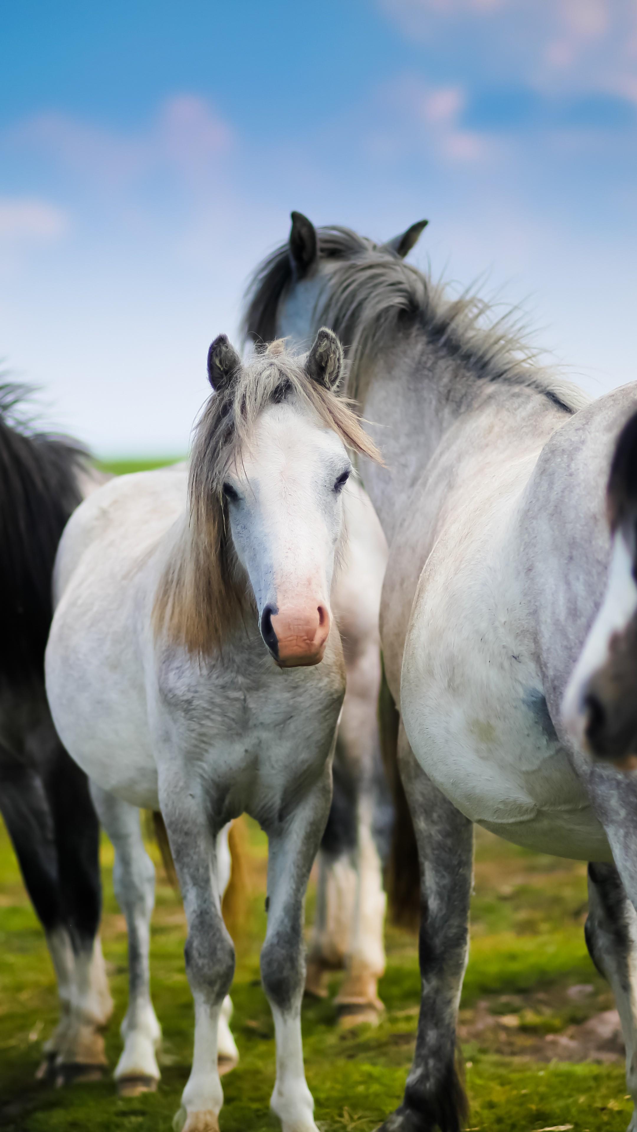 Wallpaper Horses Meadow Animals 12605