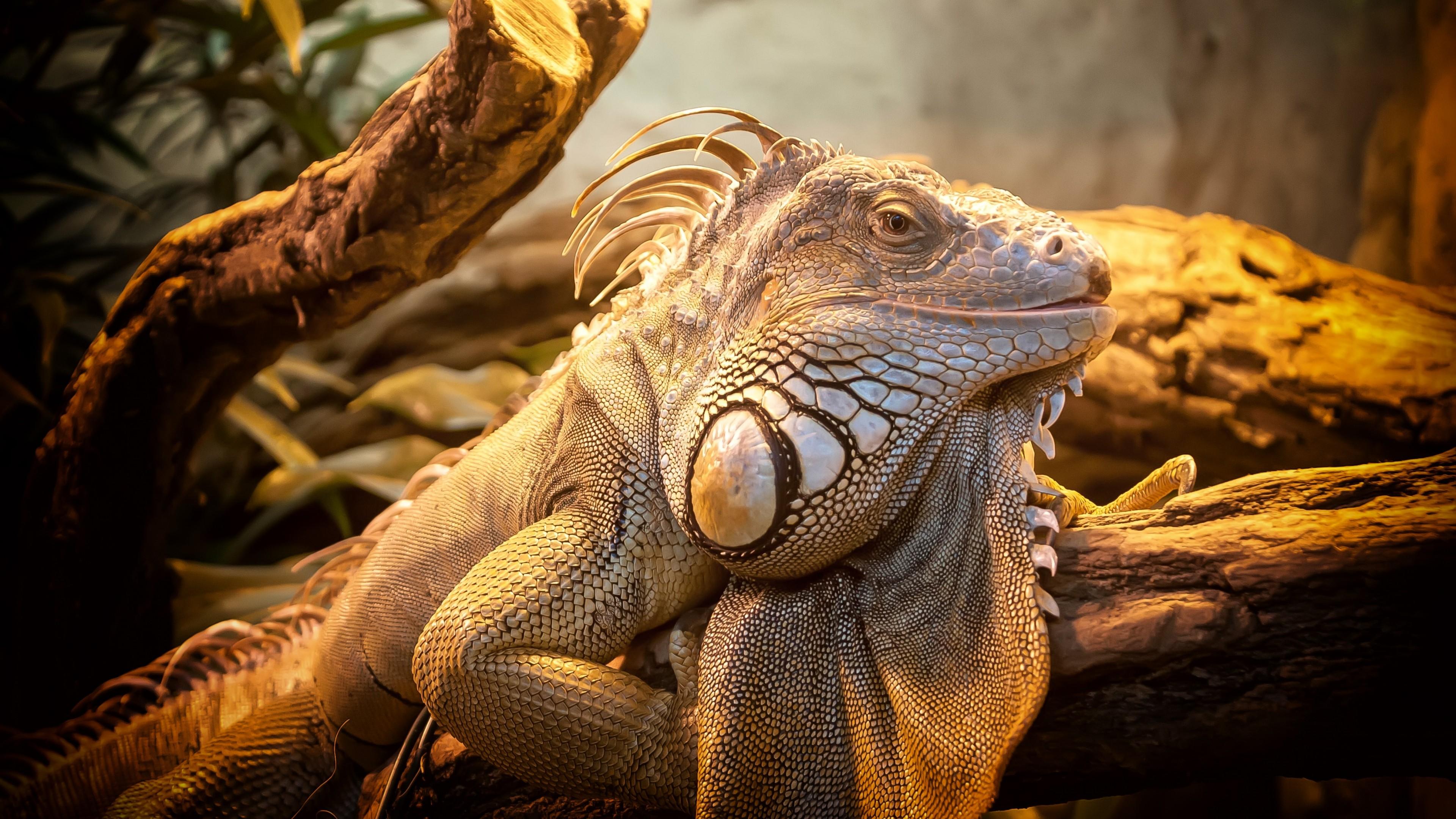 Global Taxonomic Diversity of Living Reptiles
