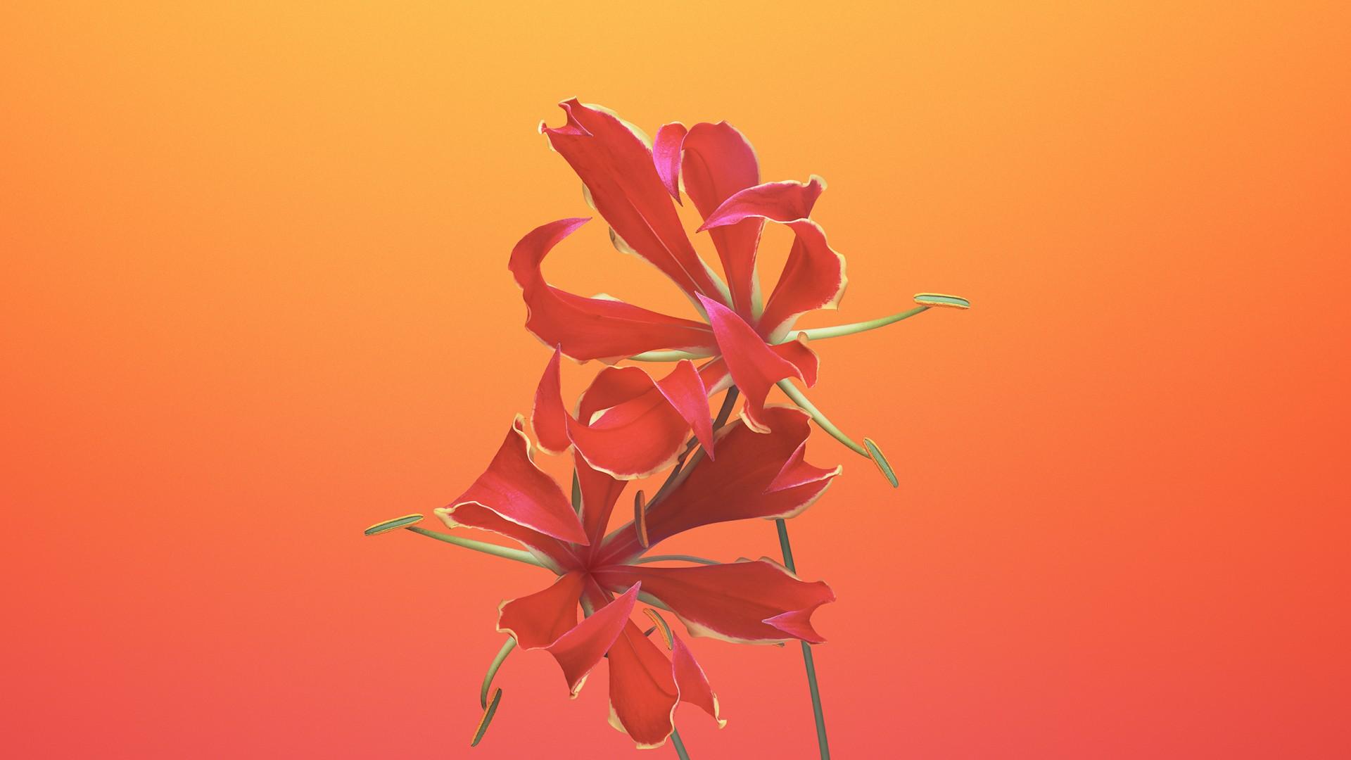 Wallpaper Iphone X Wallpapers Iphone 8 Ios11 Flower Retina 4k
