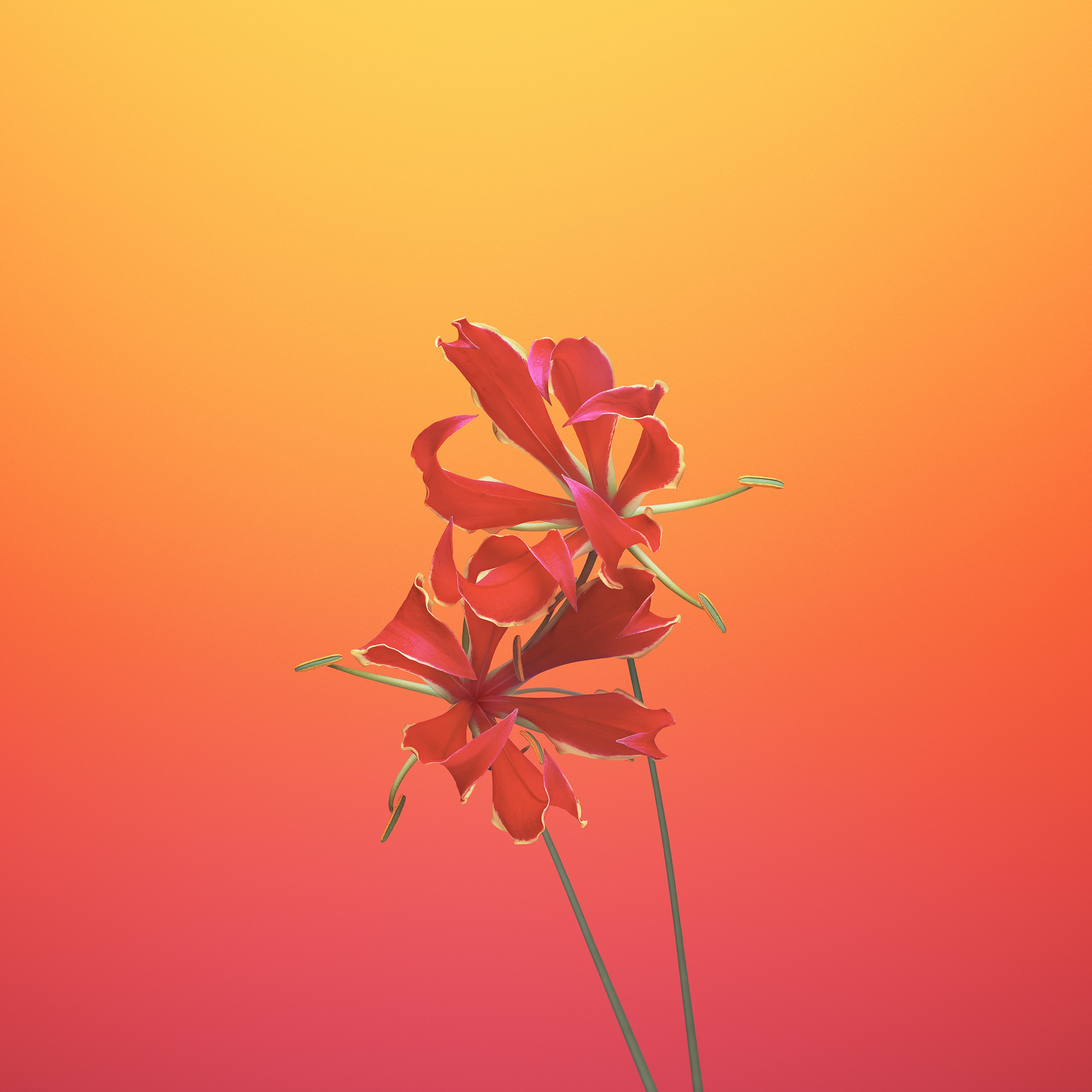 Wallpaper IPhone X Wallpapers, IPhone 8, IOS11, Flower