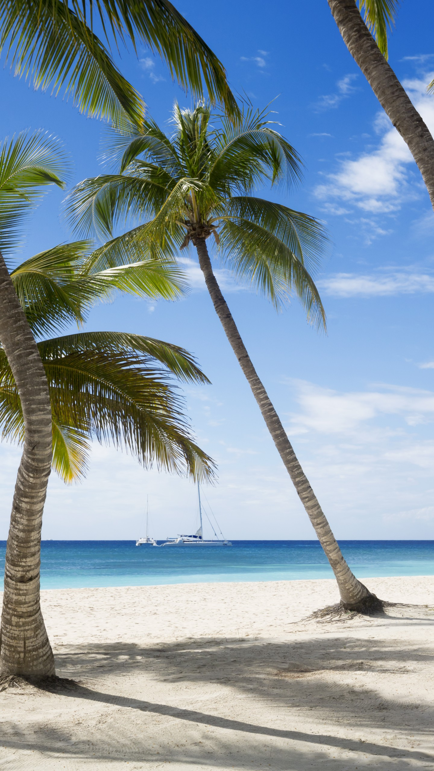 Wallpaper Jamaika 5k 4k Wallpaper The Caribbean Beach Palms Sky Travel Tourism Nature 6466