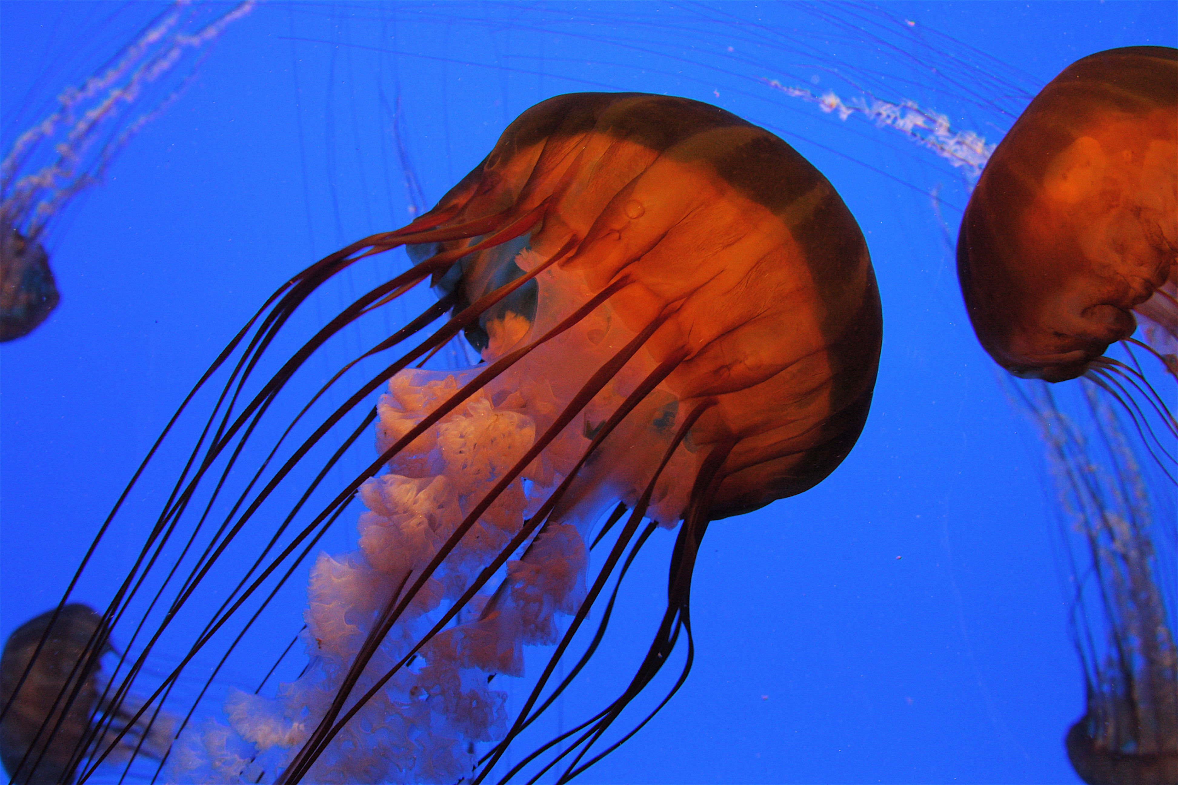 Jellyfish wallpaper home wallpaper home for Jellyfish wallpaper home