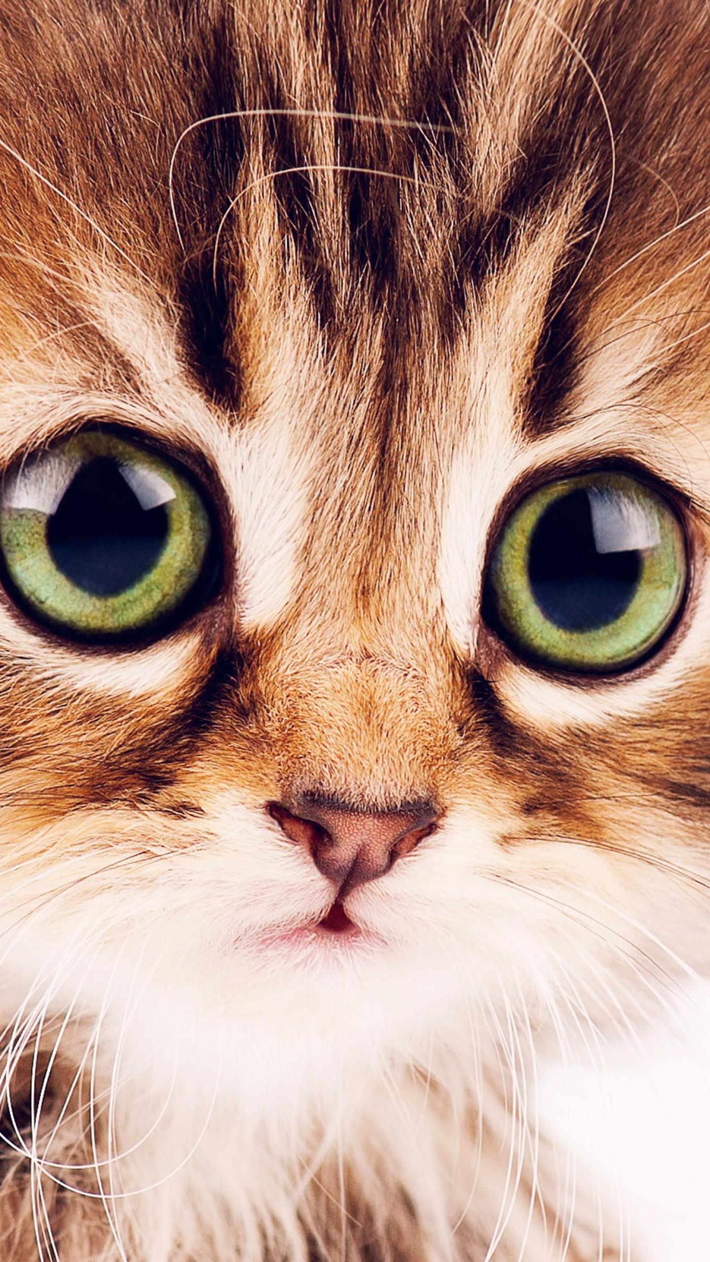 Wallpaper kitten, cute, funny animals, 4k, Animals #16151