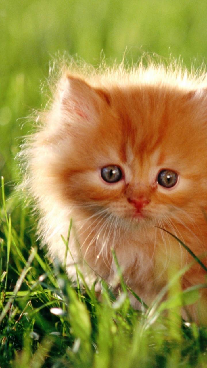 Wallpaper Kitten Cat Cute 4k Animals 14570