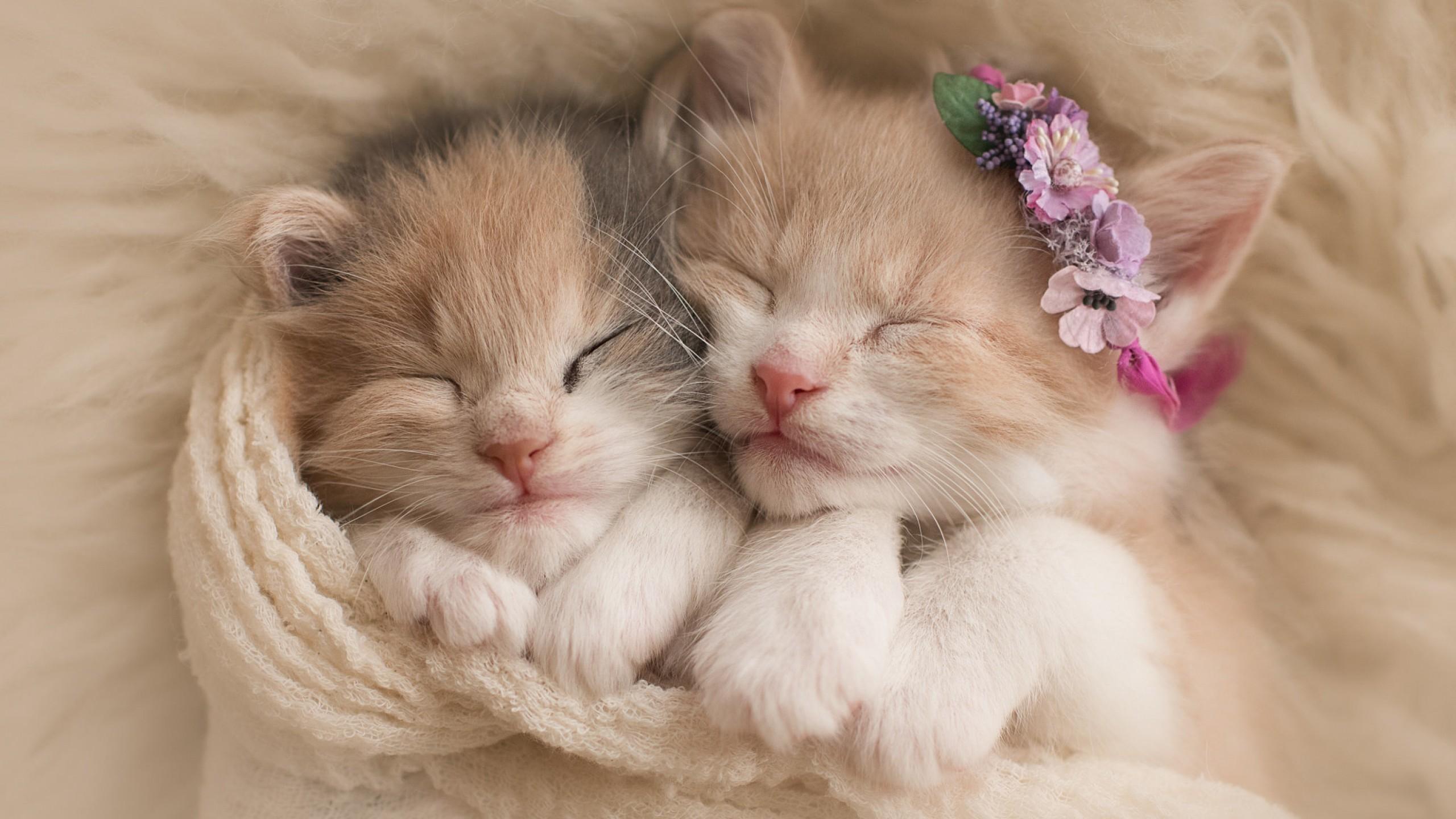 wallpaper kittens, cats, cute, animals #14540