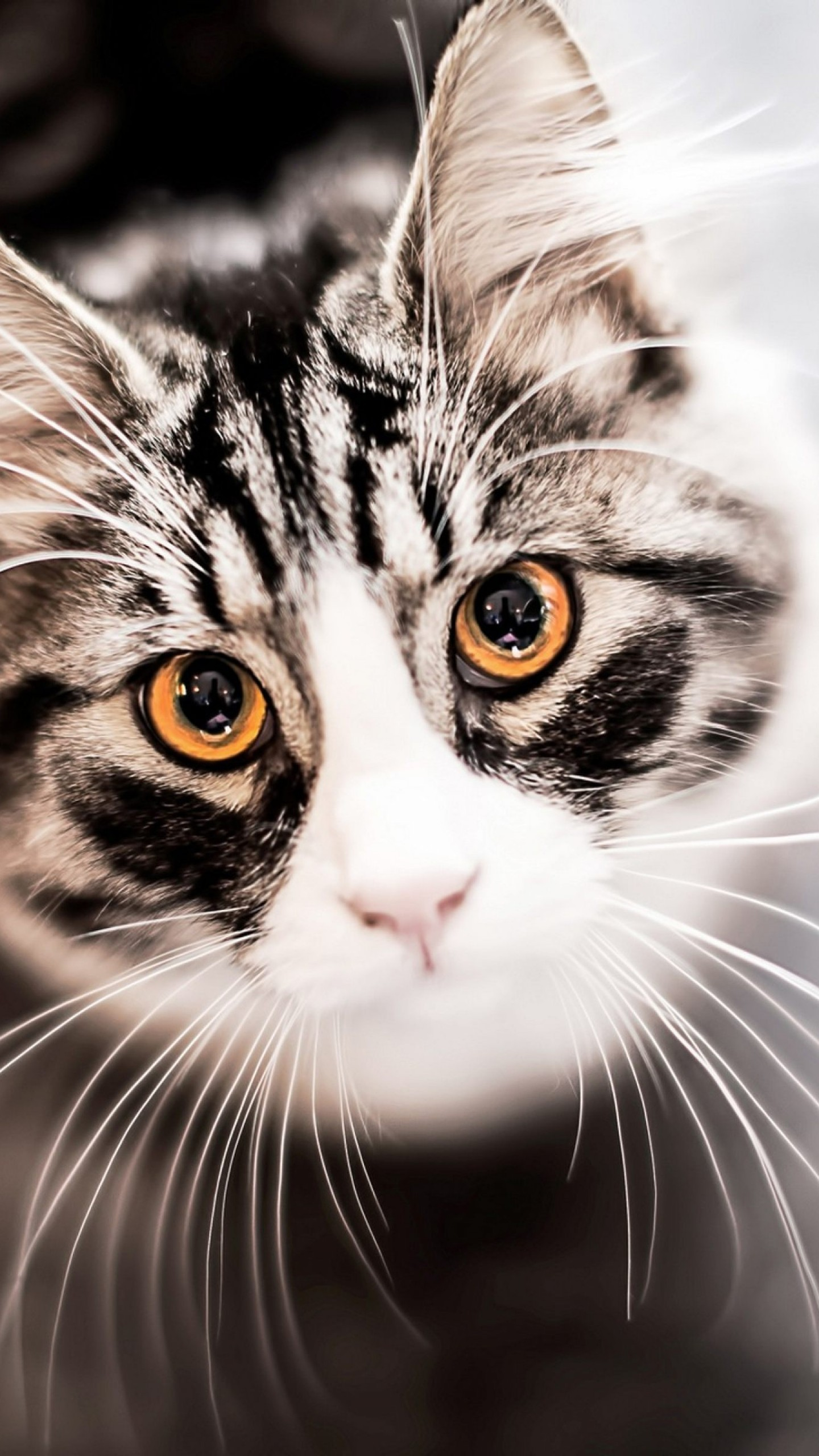 Wallpaper Kitty, Kitten, Cat, Eyes, Cute, Gray, Animals #9317