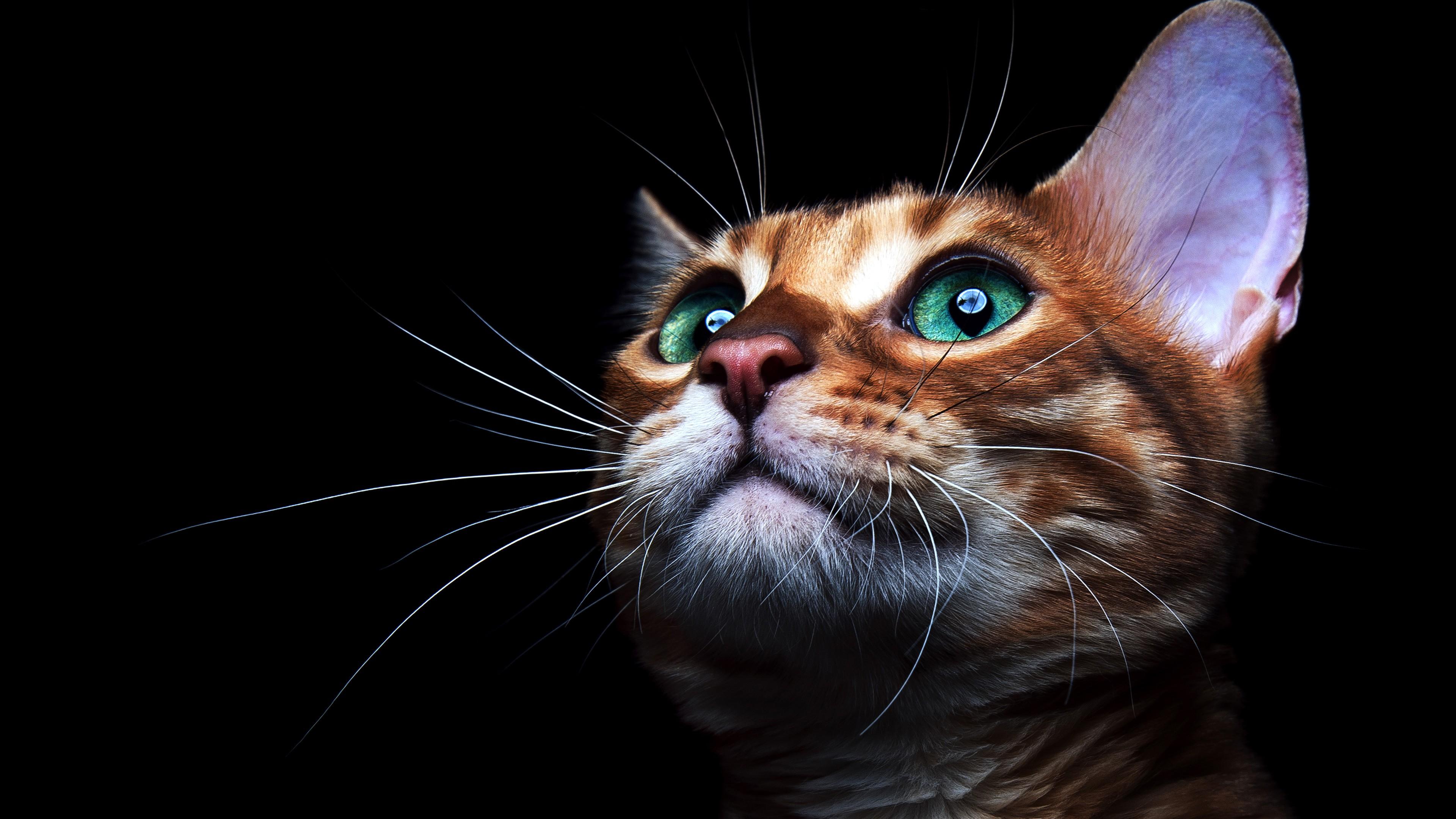 cat life hacks