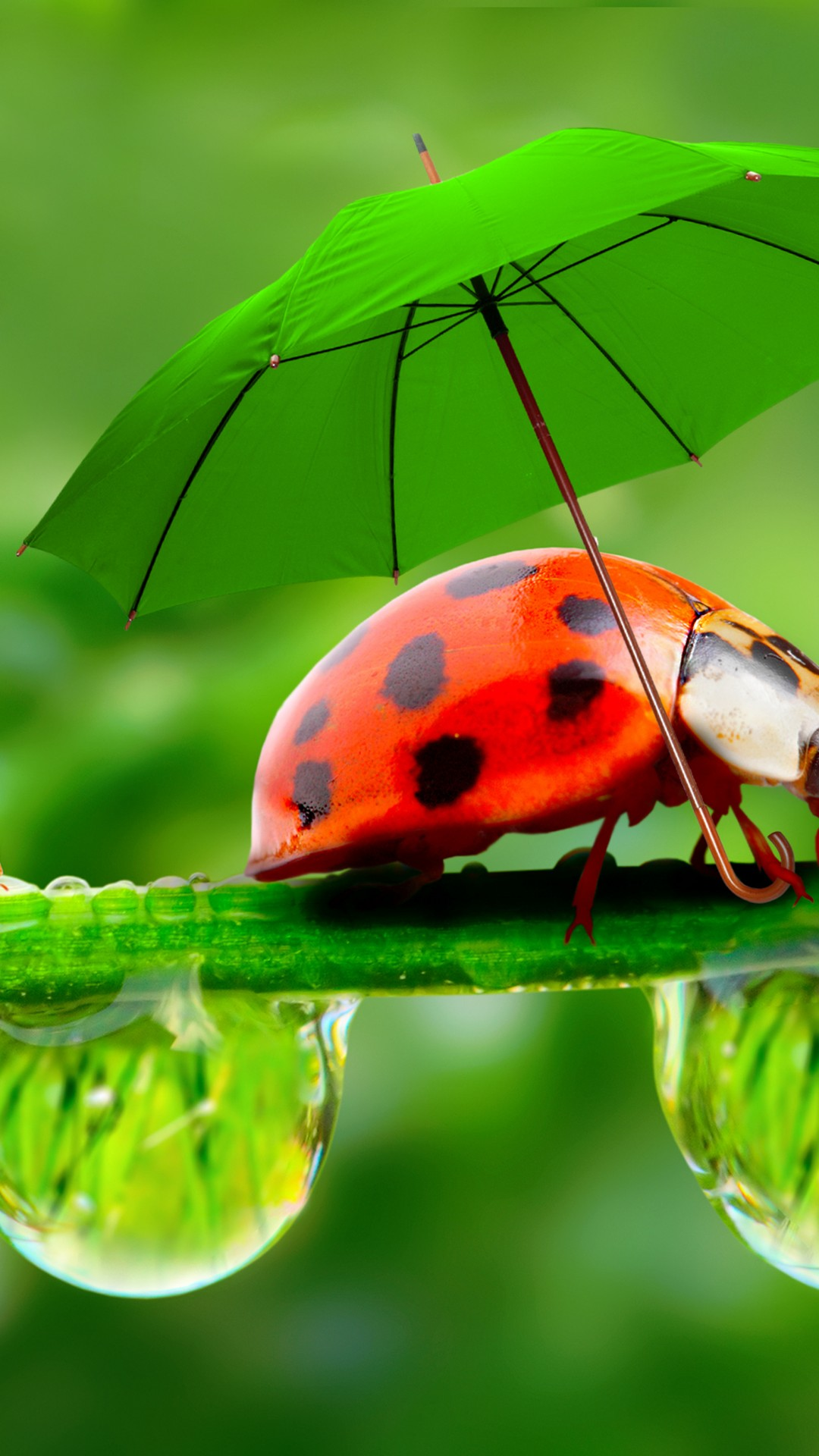 Wallpaper ladybug, red, green, grass, Umbrella, Animals #9967