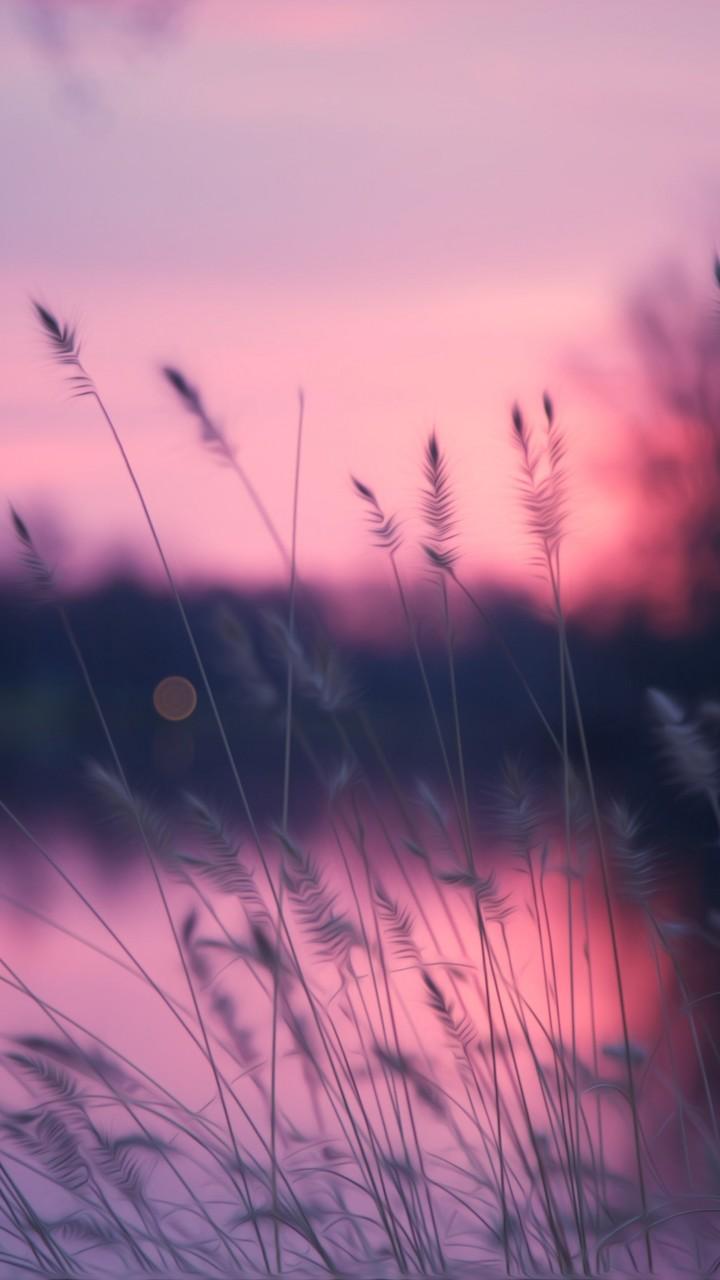 Wallpaper Lake 4k Hd Wallpaper Grass Sunset Purple