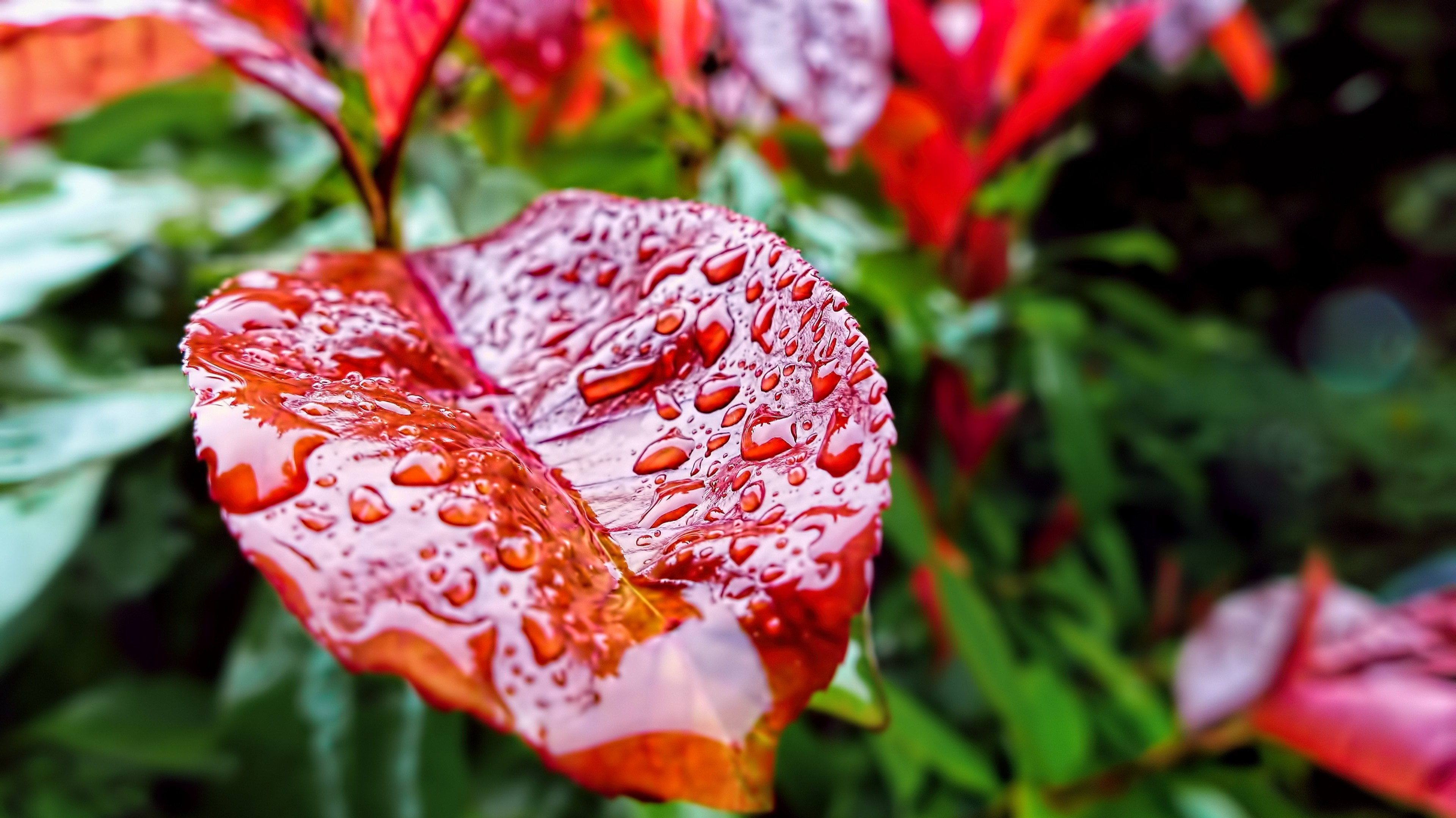 Wallpaper Leaves 5k 4k Wallpaper Drops Rain Autumn