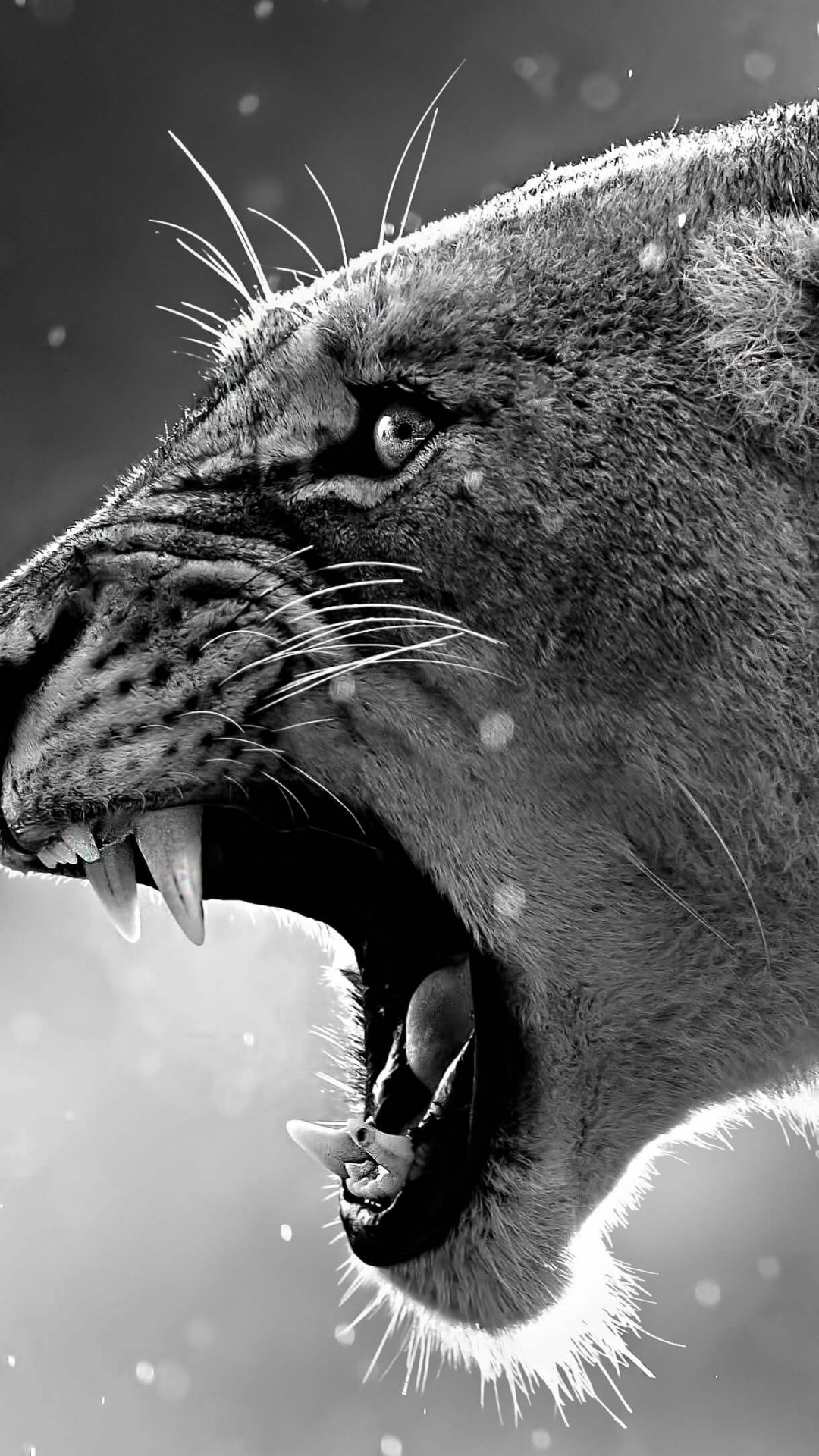 Wallpaper lion, roaring, 4k, Animals #17115
