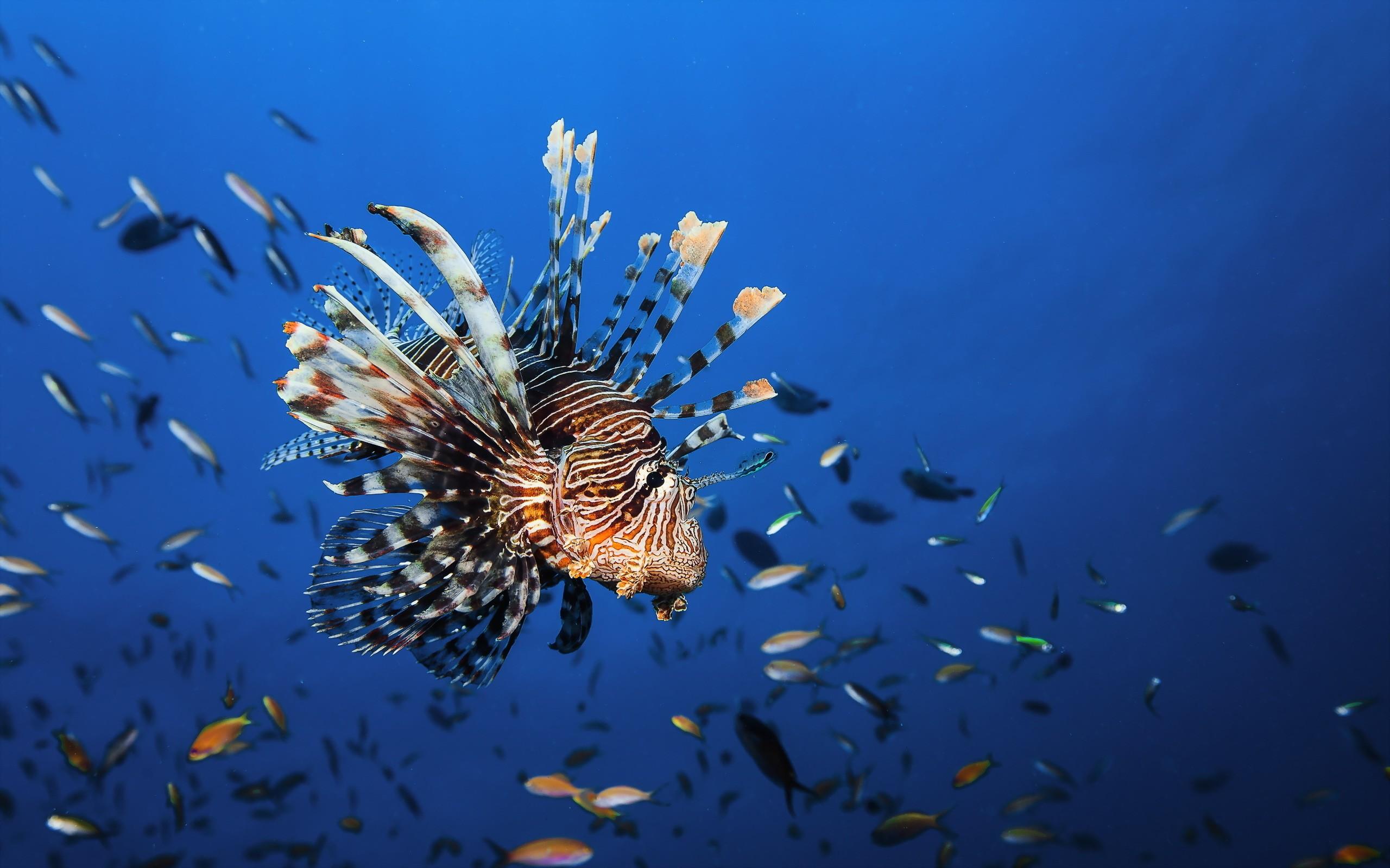 Wallpaper Lionfish, underwater, Best Diving Sites, Animals ...